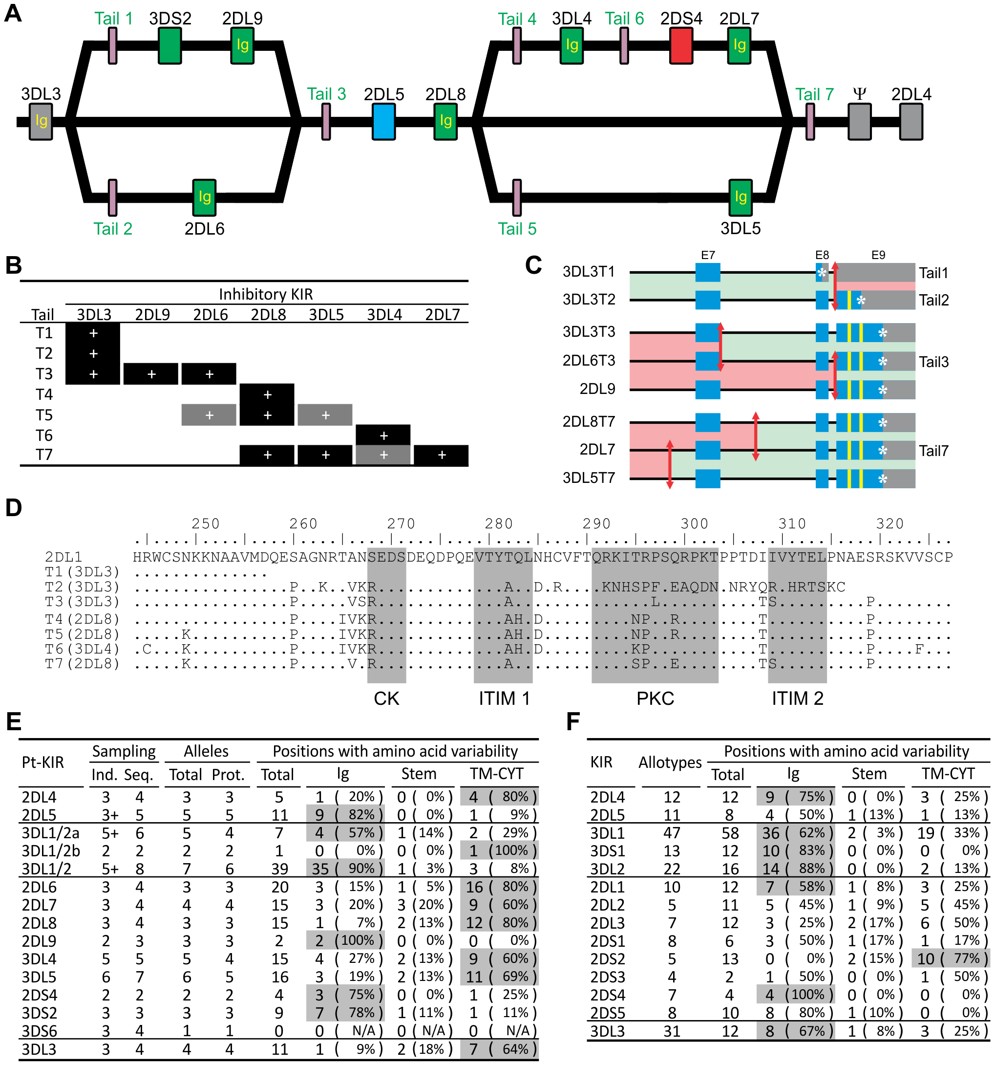 Reassorting inhibitory signaling and ligand-binding functions contributes to chimpanzee but not human <i>KIR</i> allelic diversity.