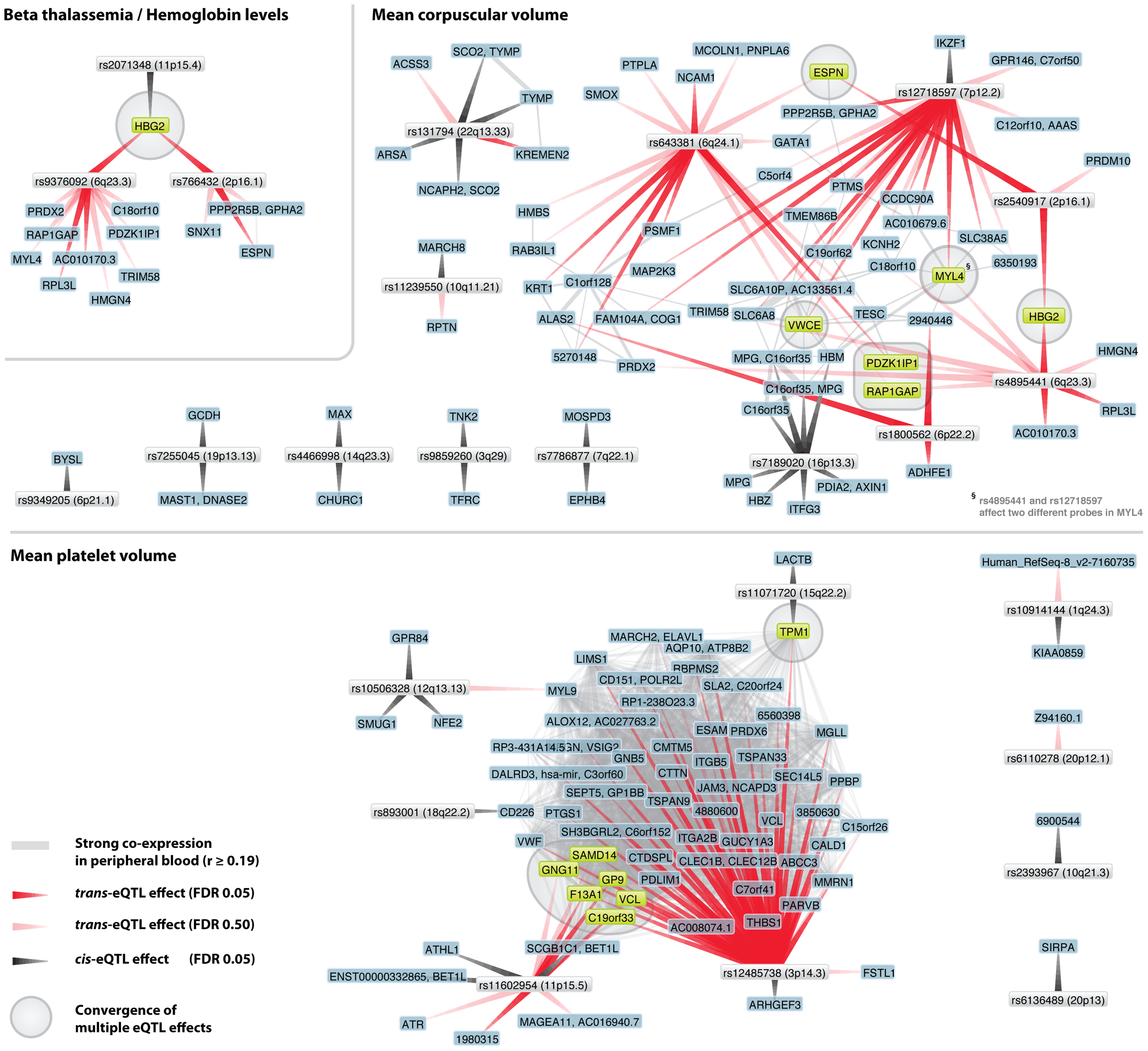 Trait-associated SNPs show convergence on multiple genes.