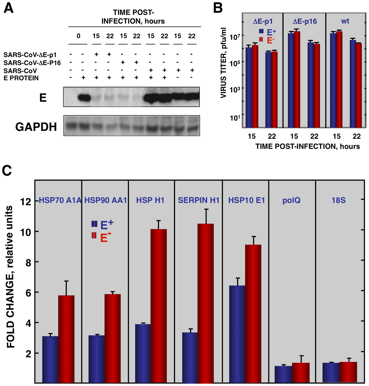 Effect of SARS-CoV E protein on stress induced by SARS-CoV infection.
