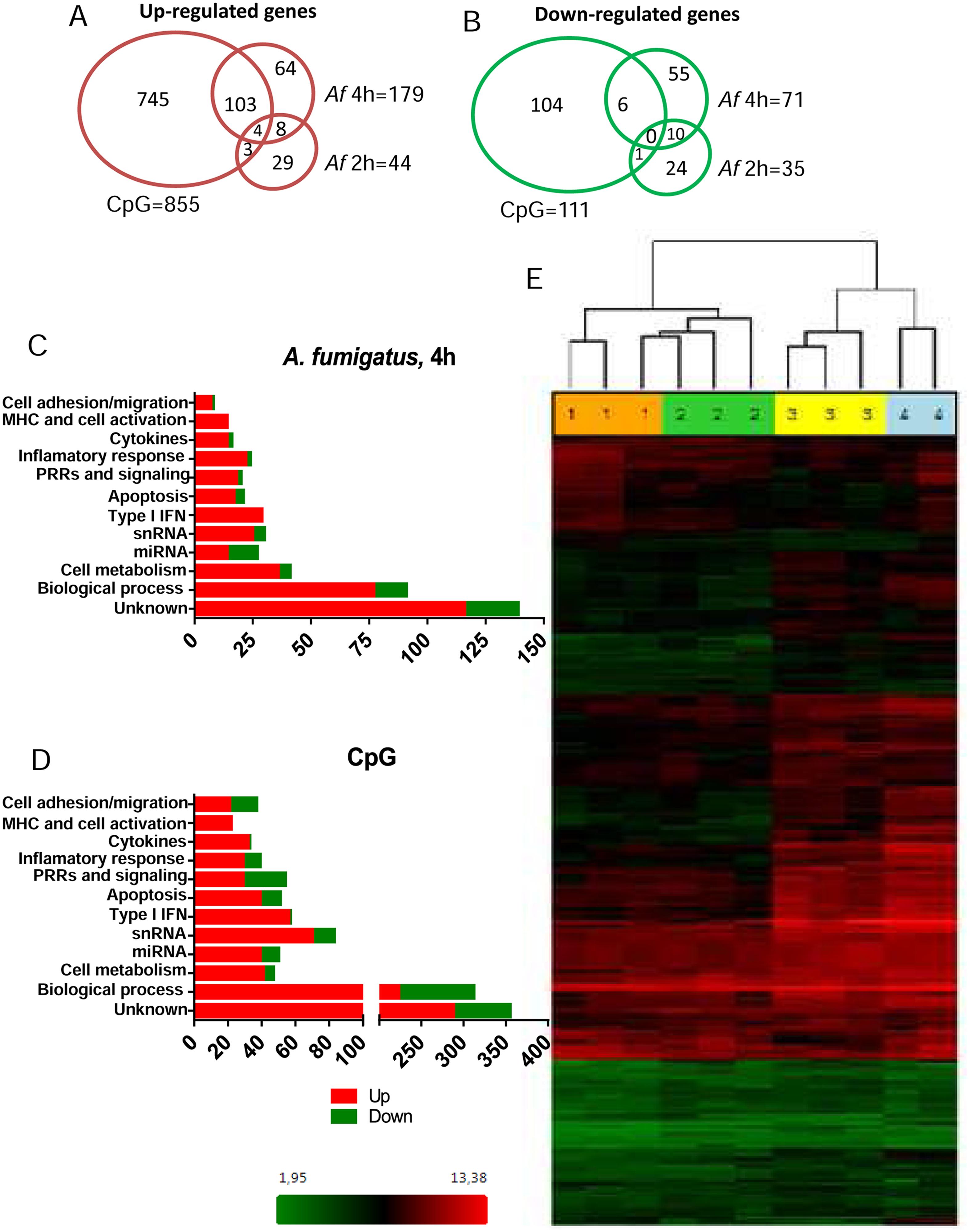 The pDC transcriptome following stimulation with <i>A</i>. <i>fumigatus</i>.