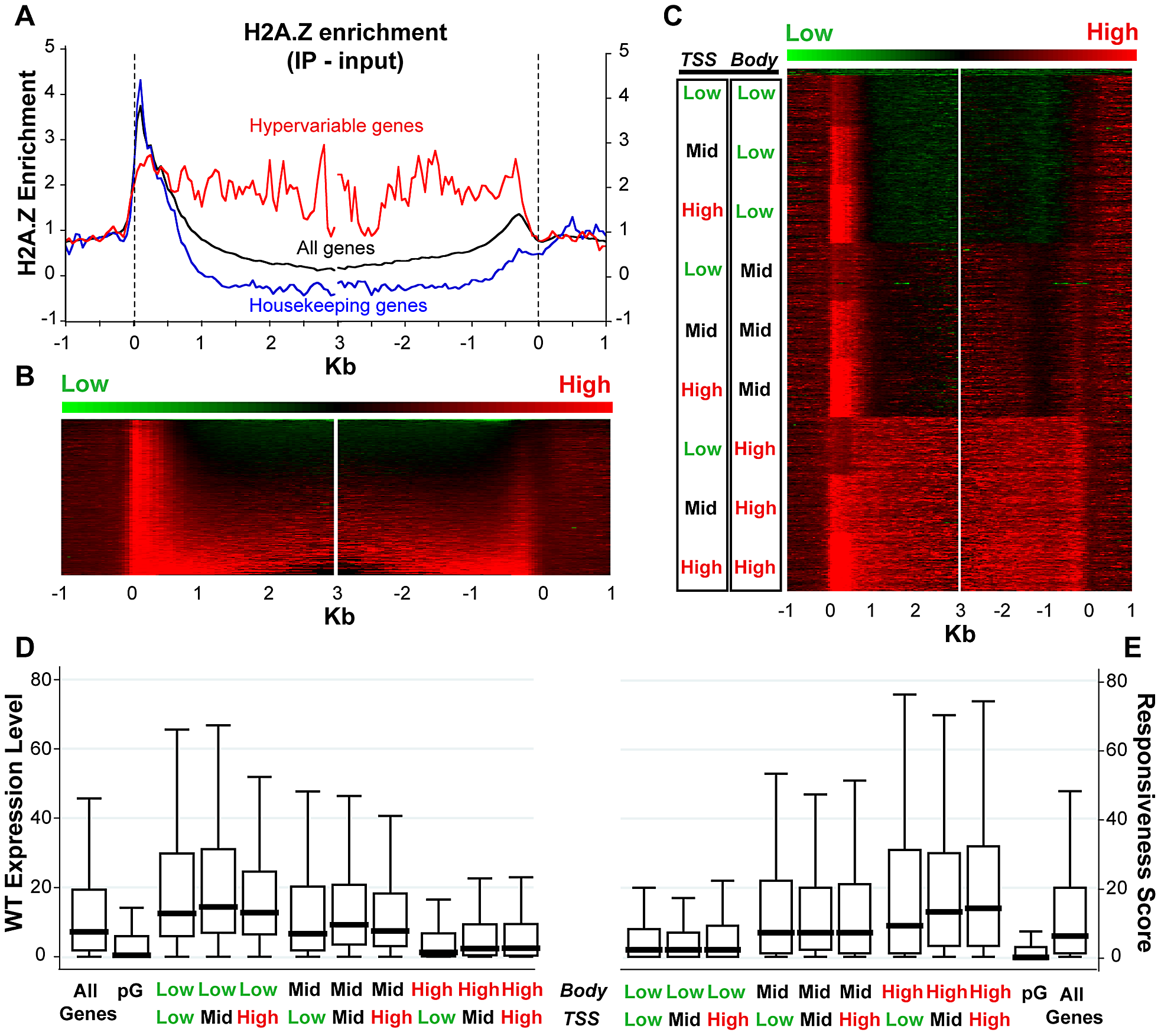 H2A.Z enrichment in gene bodies is associated with lower expression and higher responsiveness.
