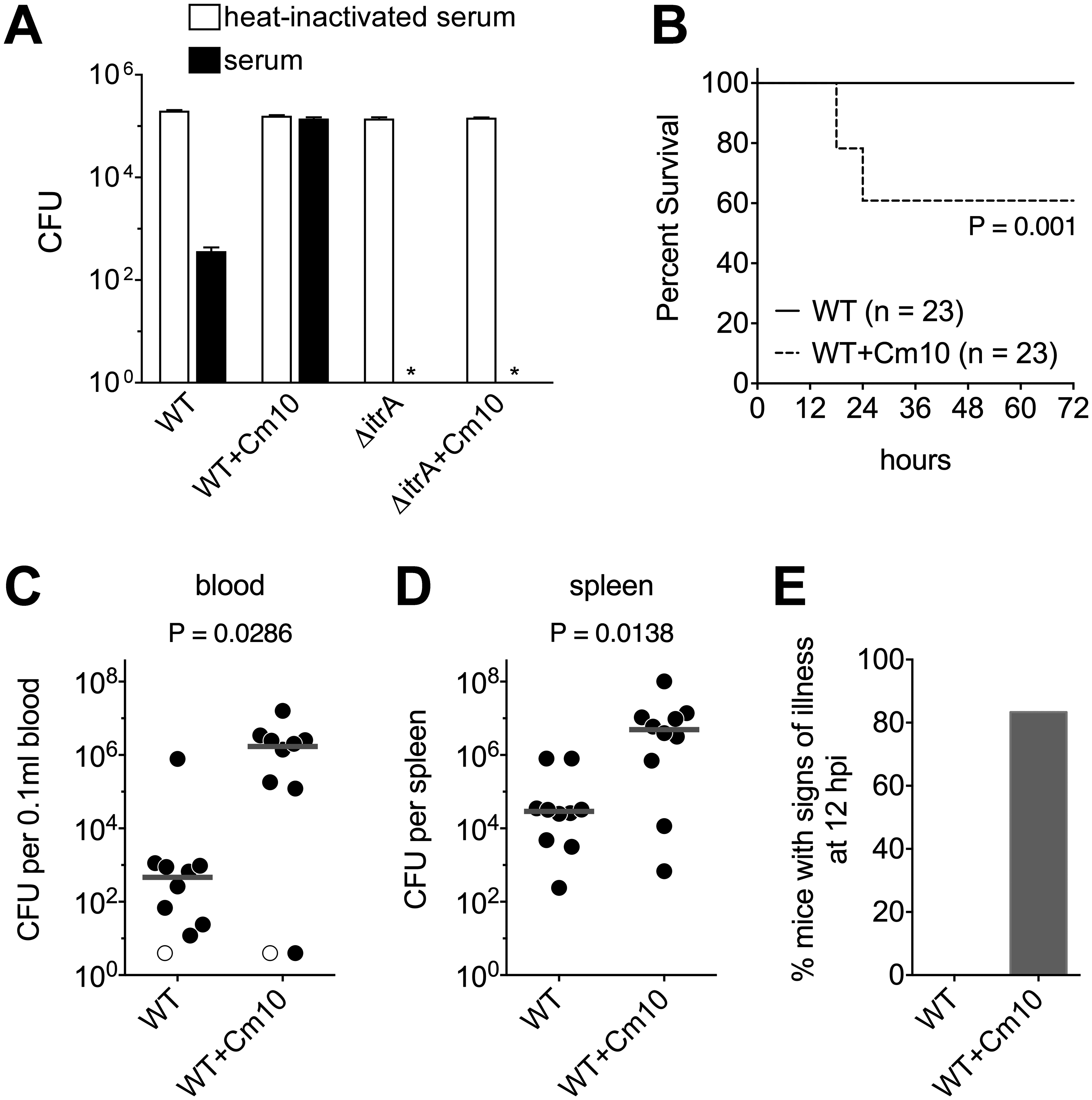 Antibiotic-induced exopolysaccharide hyperproduction increases serum resistance and virulence.