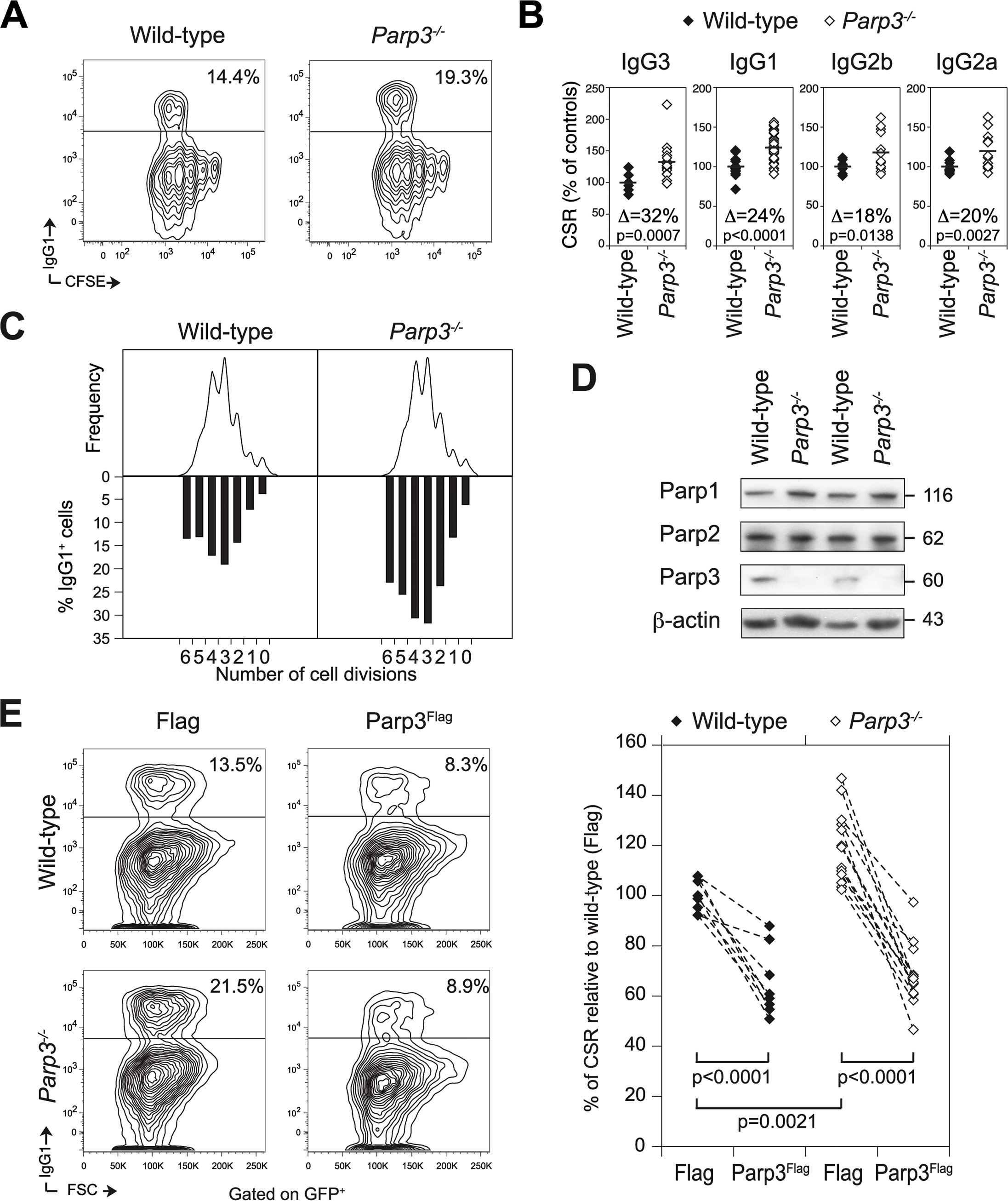 Parp3 is a negative regulator of immunoglobulin class switch recombination.
