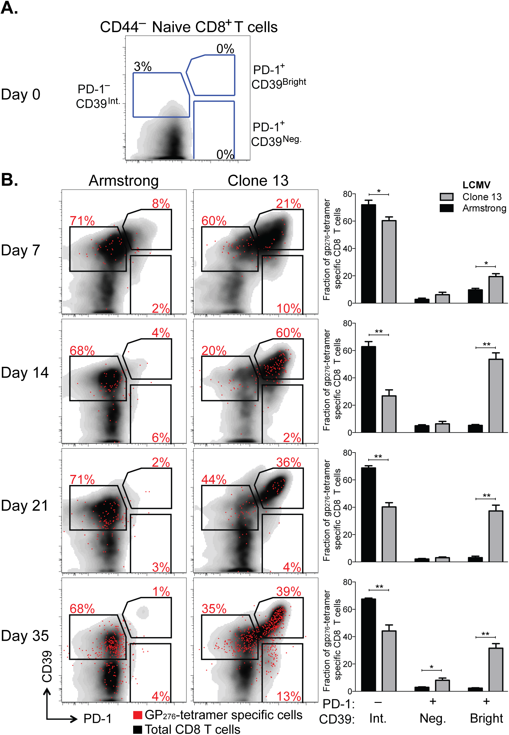 CD39 is highly up-regulated by exhausted CD8<sup>+</sup> T cells in a mouse model of chronic infection.