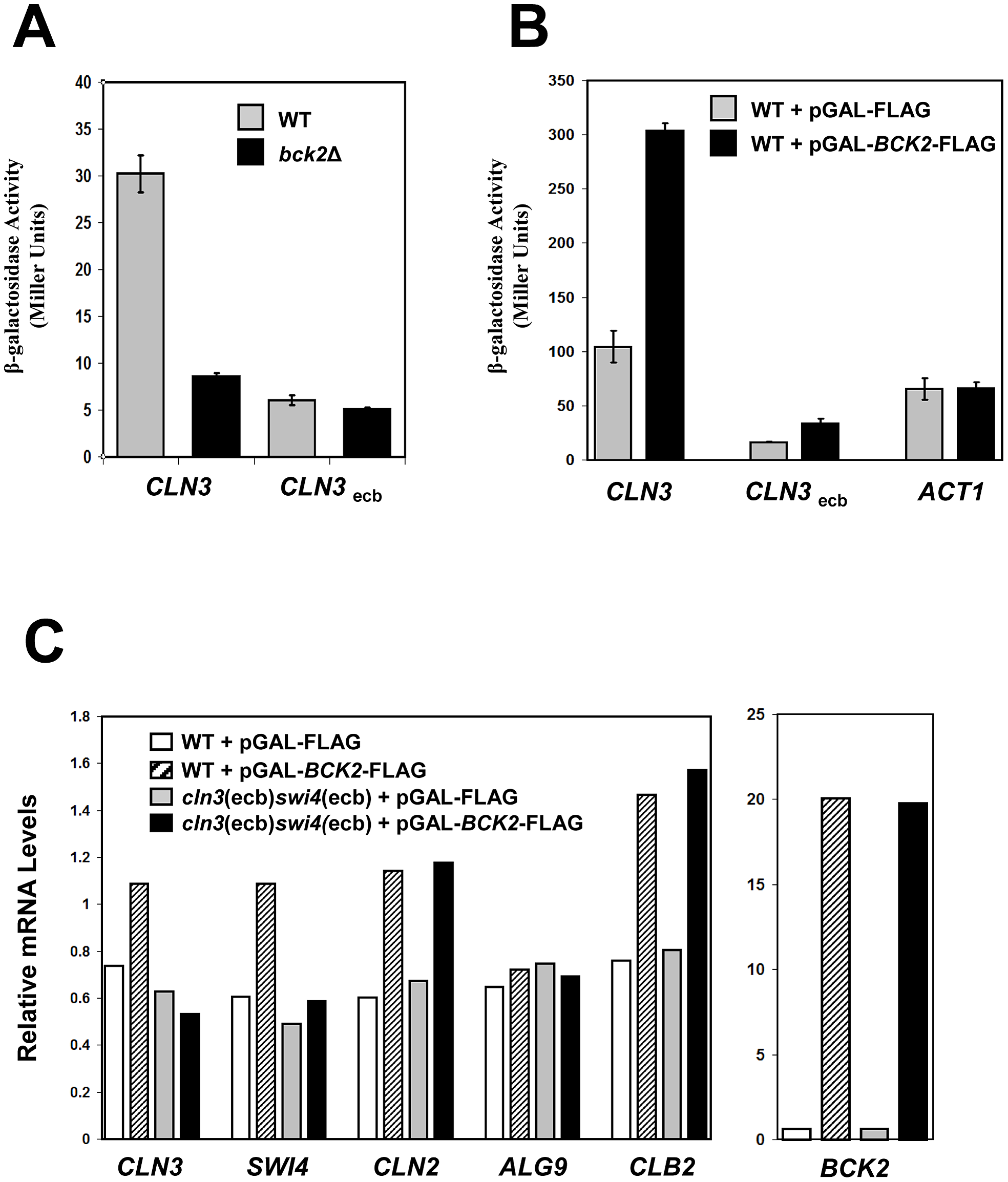 Bck2 requires intact ECB elements for transcriptional activation.
