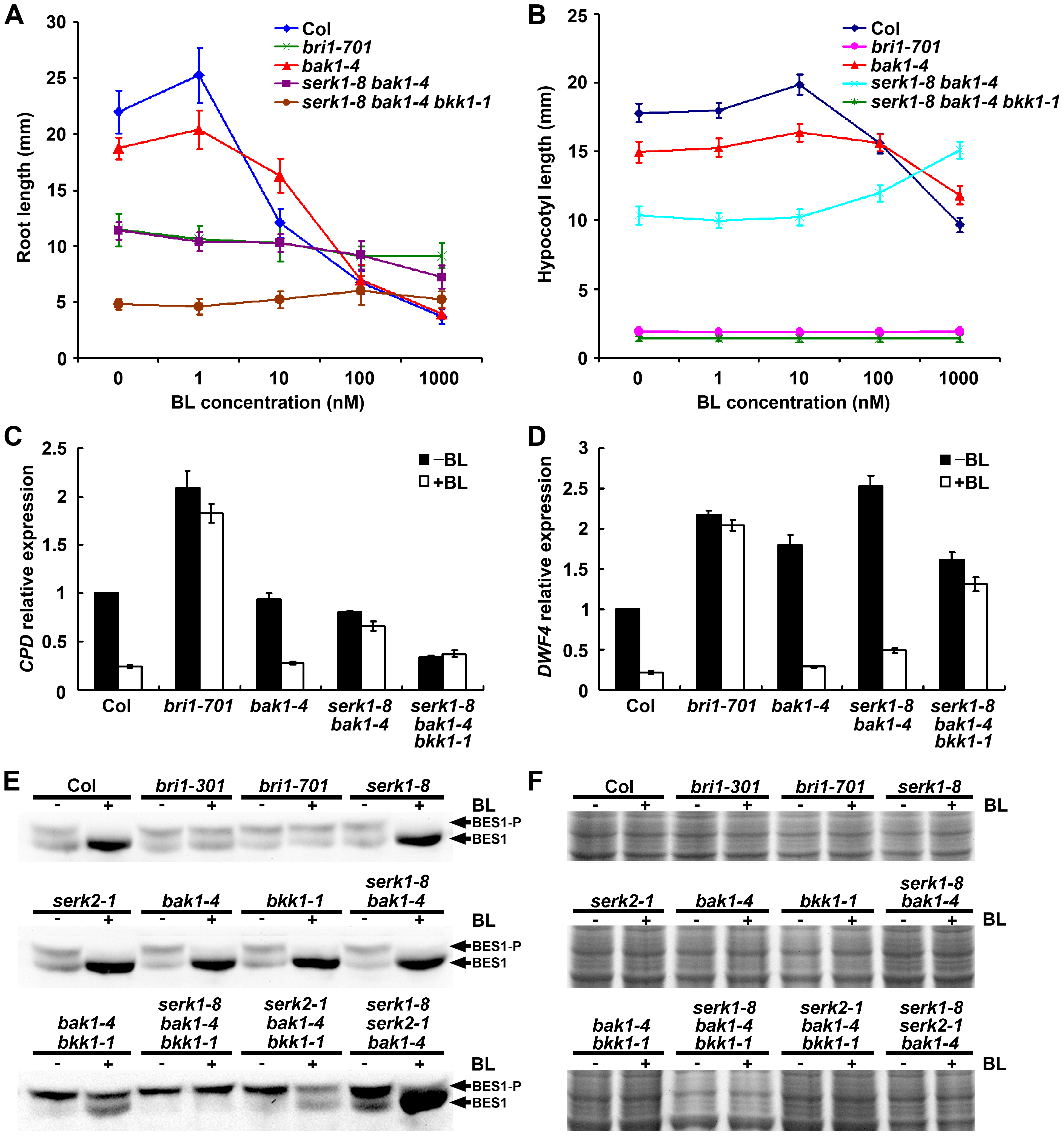 <i>serk1-8 bak1-4 bkk1-1</i> triple null mutant is insensitive to exogenous BR treatment.