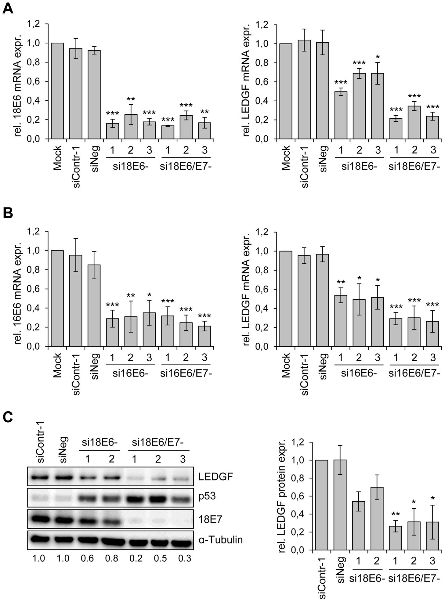 HPV oncogene silencing represses <i>LEDGF</i> expression.