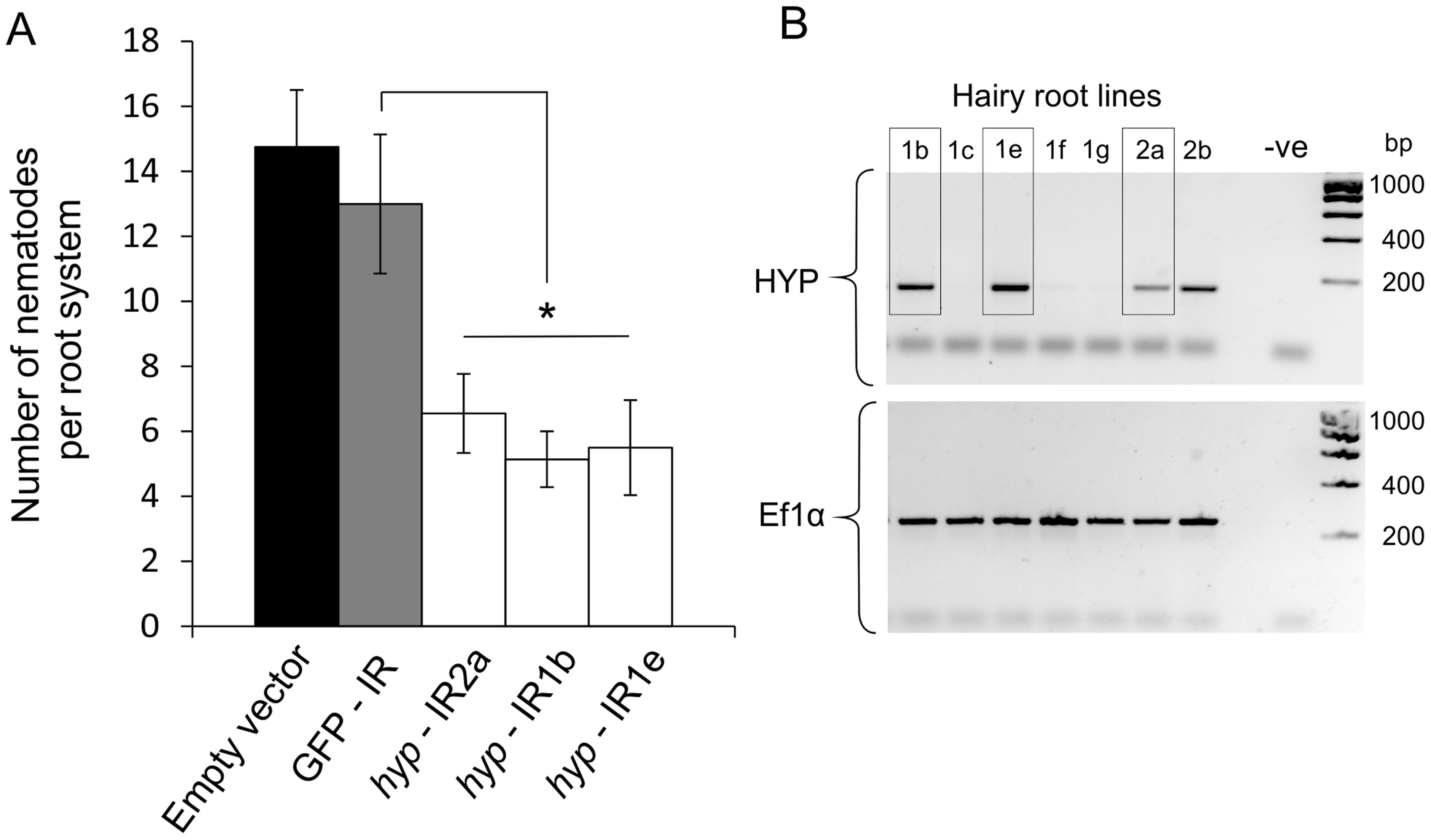 RNA interference of <i>Gp-hyp</i> genes.