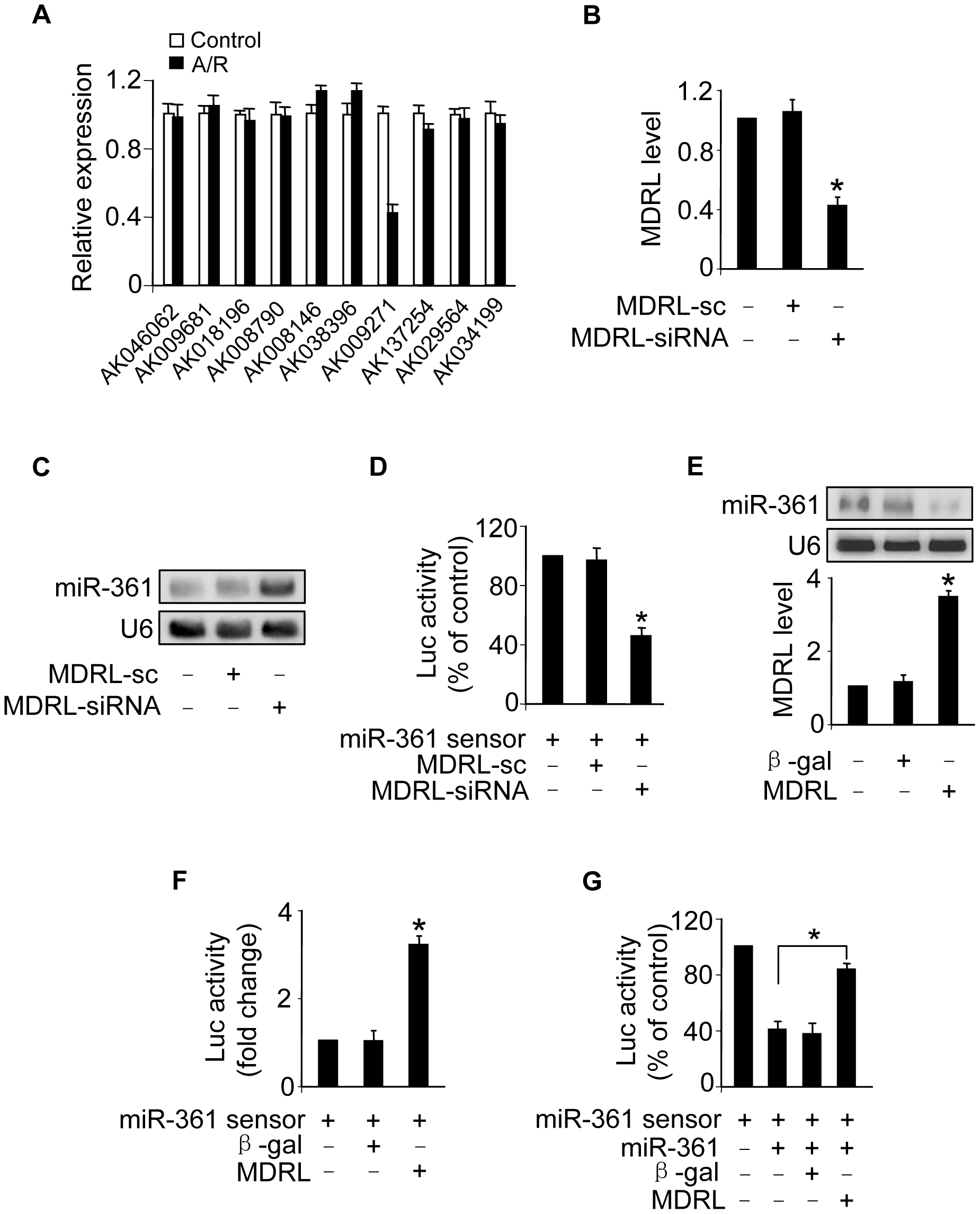 MDRL can regulate miR-361 expression and activity.