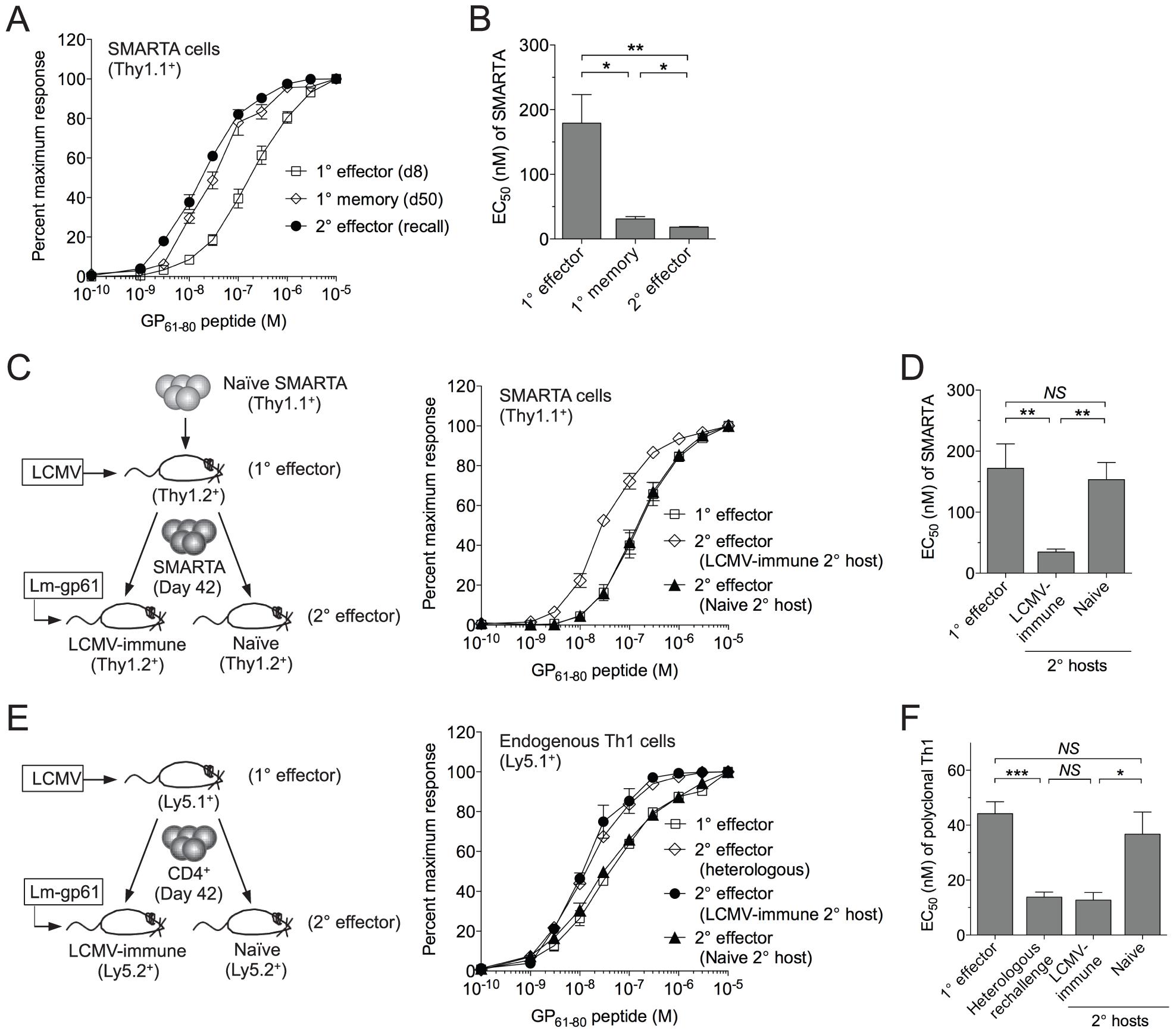 SMARTA memory cells lose functional avidity following heterologous rechallenge in naïve but not immune hosts.