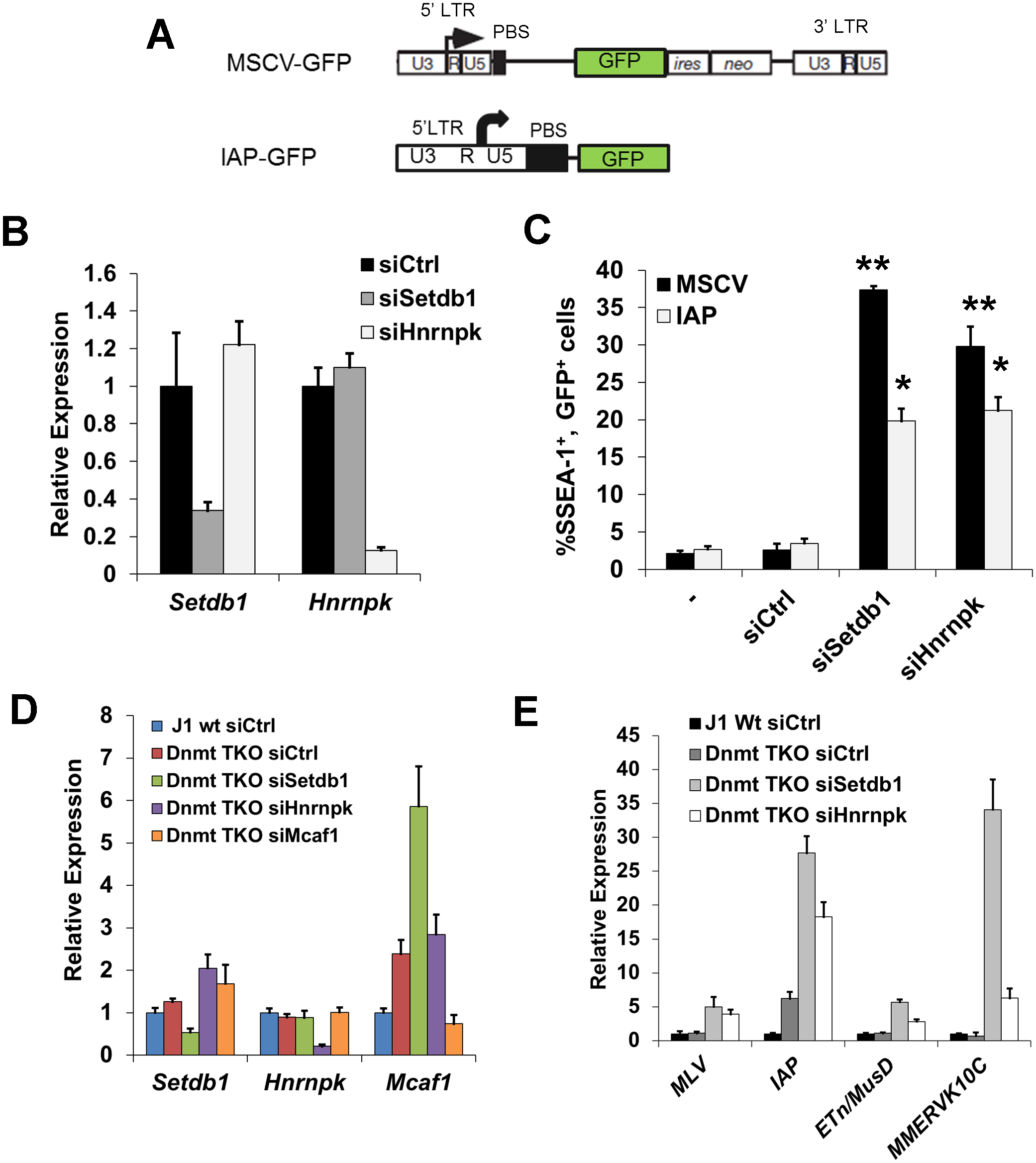 siRNA knockdown of hnRNP K results in de-repression of proviral reporters and ERVs.
