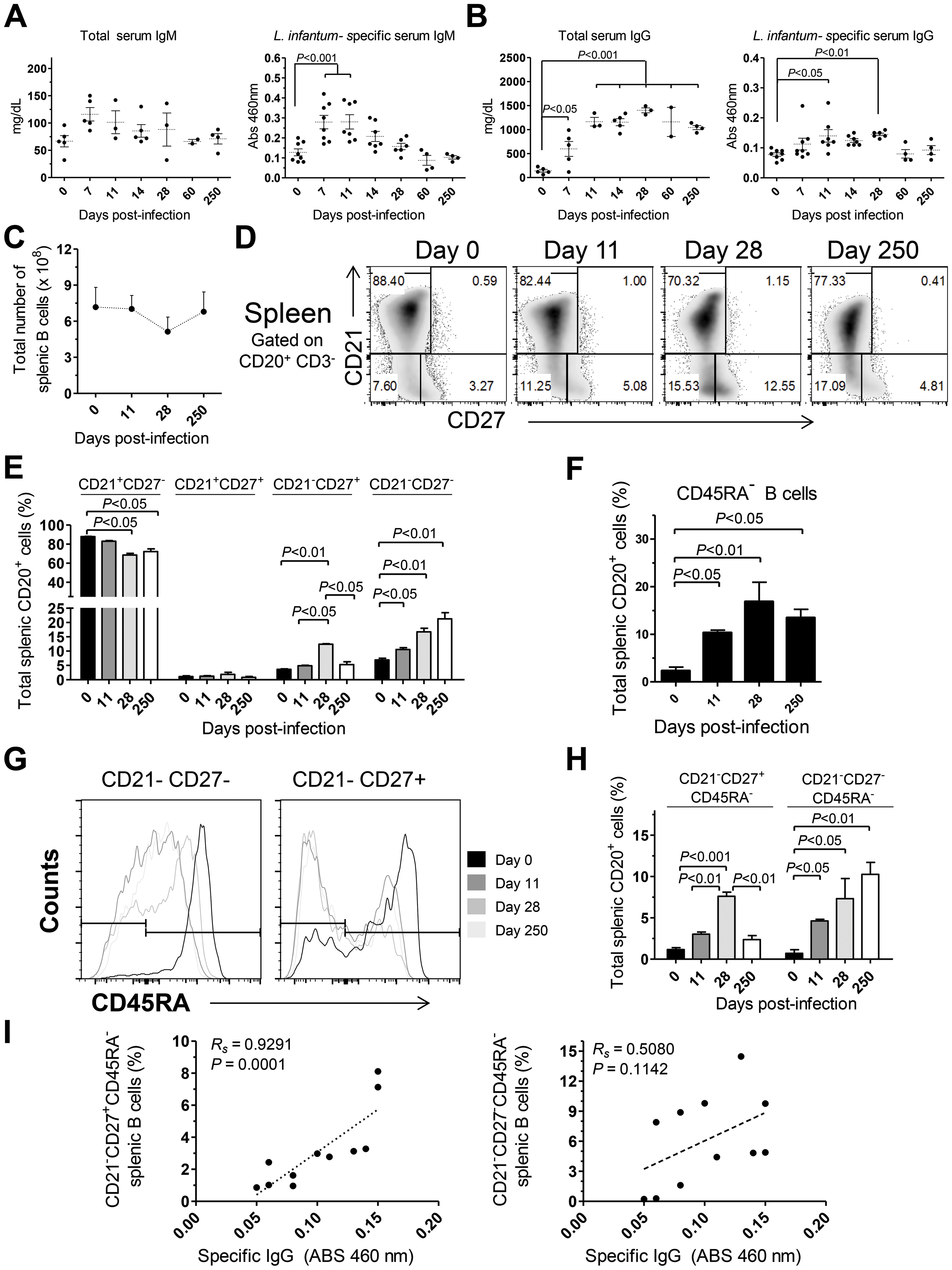 Humoral response and splenic B cell dynamics in <i>L. infantum</i>-infected rhesus macaques.