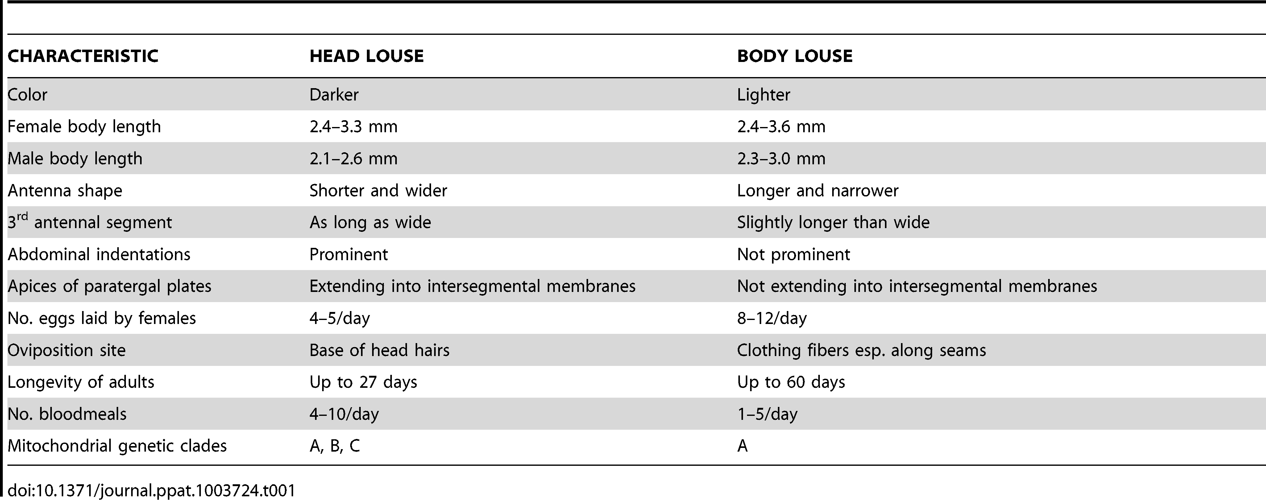 Selected morphological and biological differences between human head and body lice.