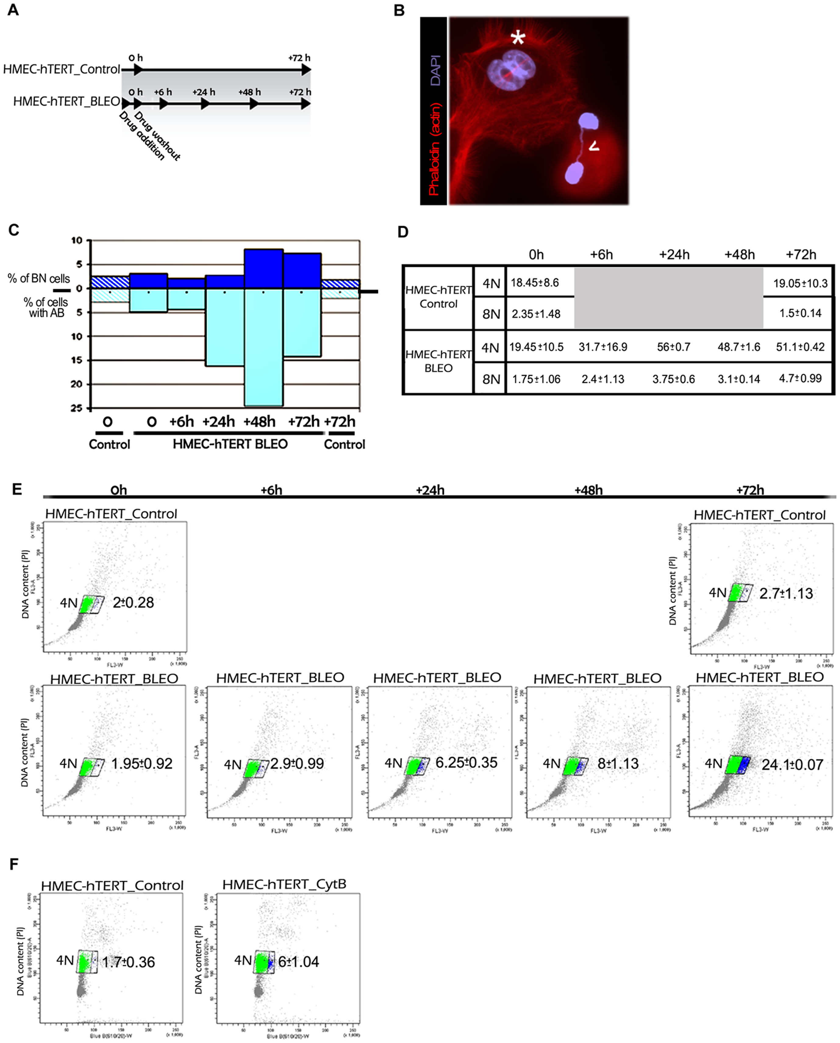 Artificially induced anaphase bridges engender binucleated polyploid HMEC-hTERT cells.