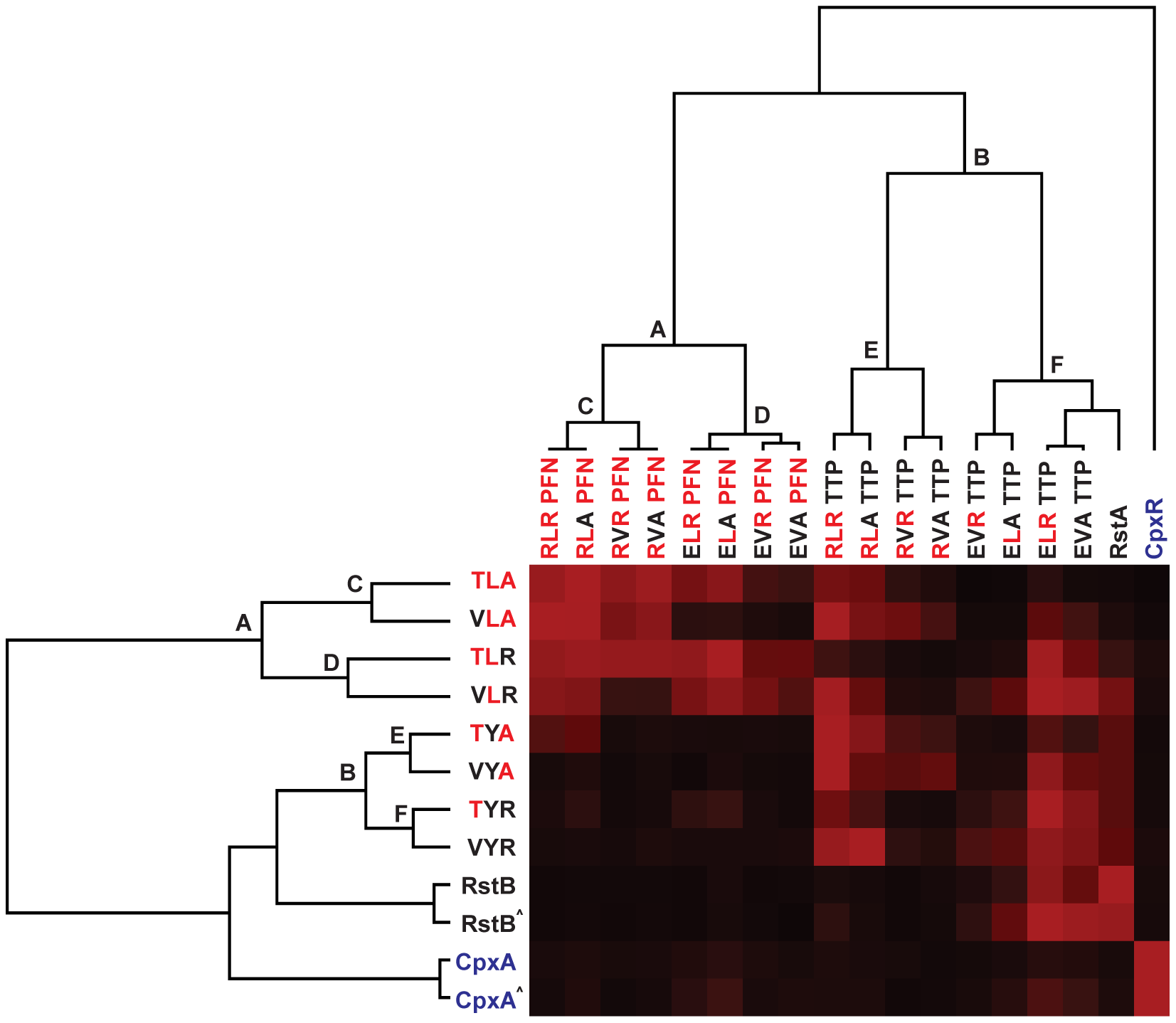 Hierarchical clustering of trajectory-scanning mutagenesis of EnvZ and OmpR.