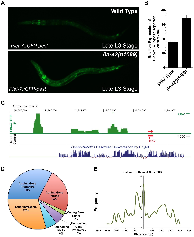LIN-42 binds to the putative regulatory regions of both miRNAs and mRNAs.