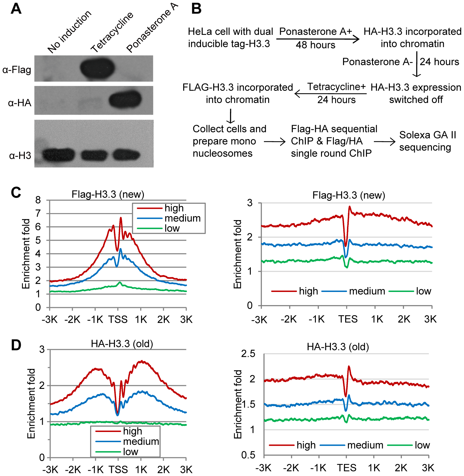 Determine H3.3 nucleosome occupancy, turnover and splitting events at the genome-wide level.