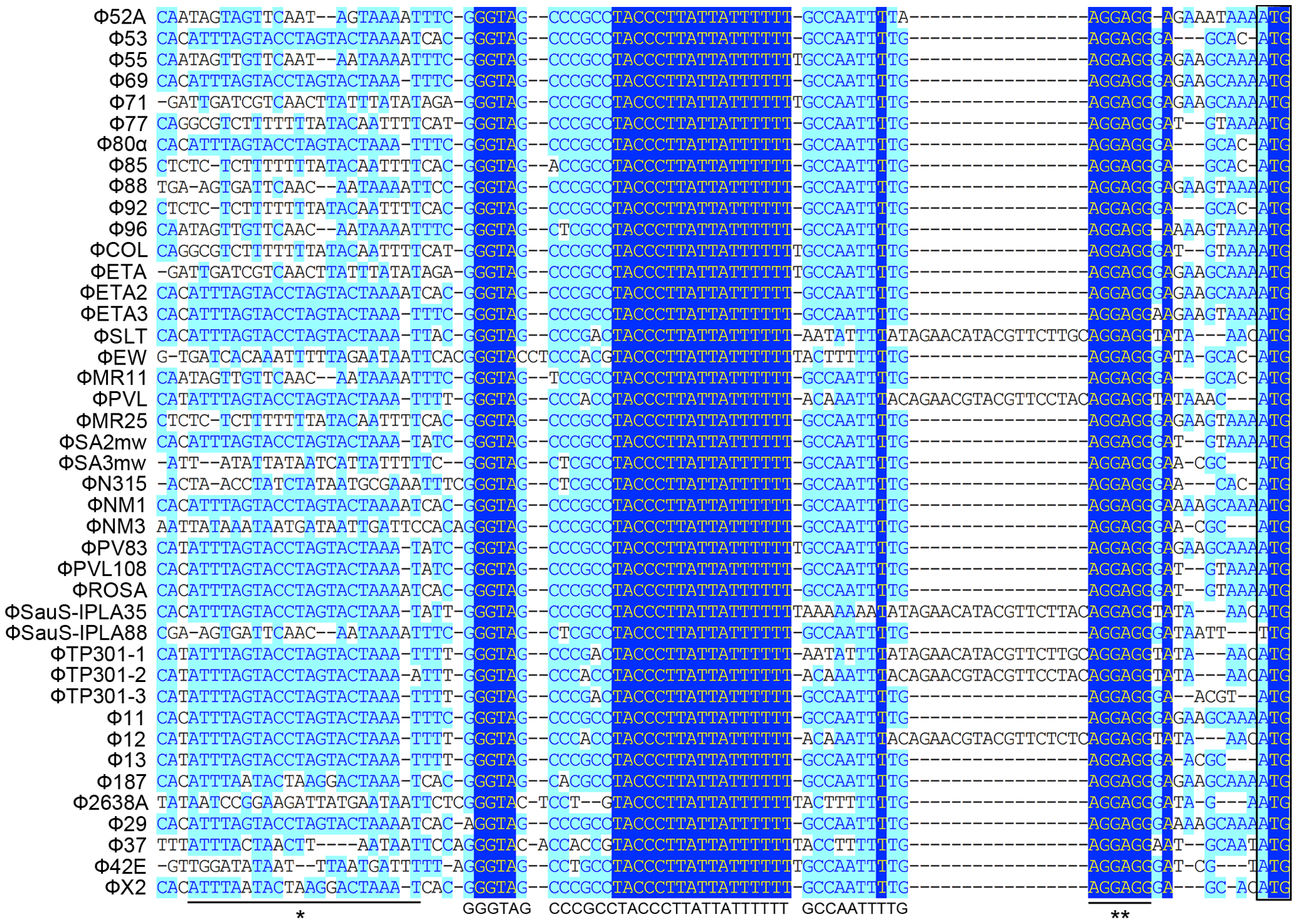 Sequence analysis of 5′-UTR of <i>int</i> in 42 <i>S. aureus</i> prophages.