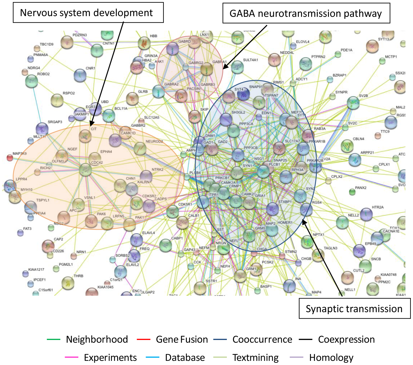 Predicted interaction networks of brain cell genes significantly downmodulated in untreated HAND and expressed at close to control levels in HAND patients under ART.