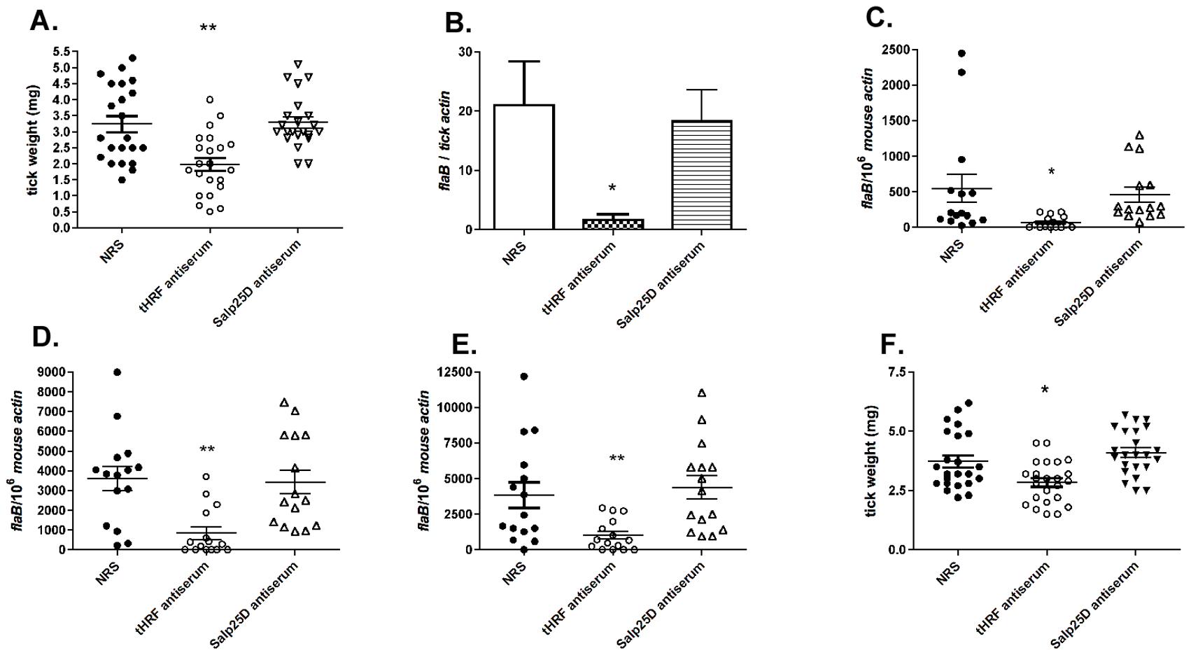 tHRF antiserum interferes with tick feeding and <i>B. burgdorferi</i> transmission.