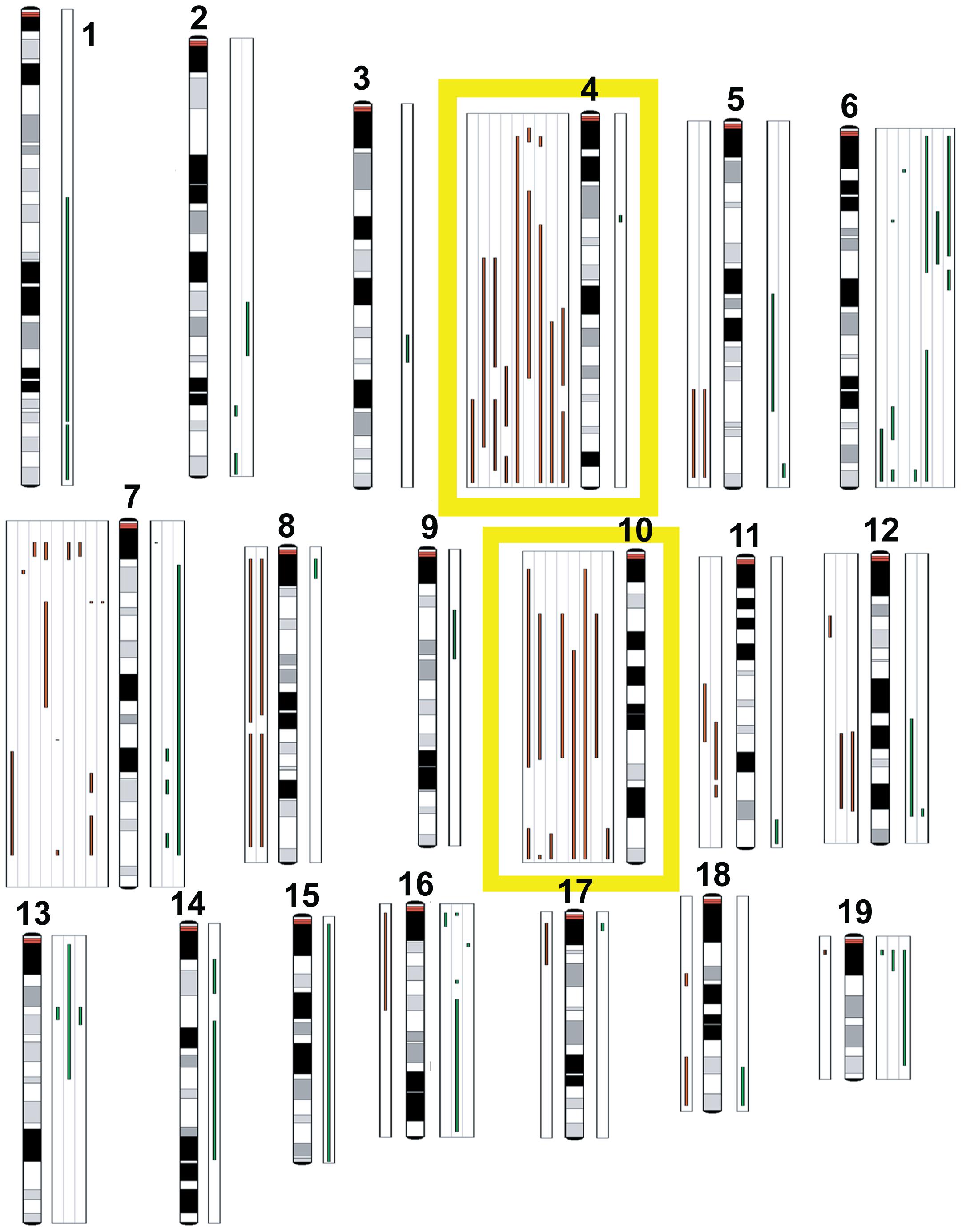Comparative genomic hybridization.