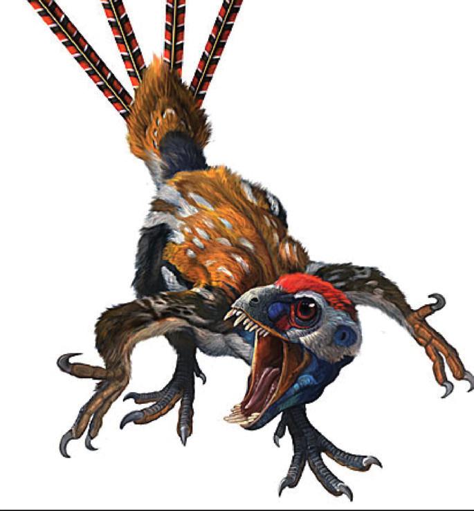 Obr. 6b. Epidexipteryx – možný vzhled, umělecká rekonstrukce