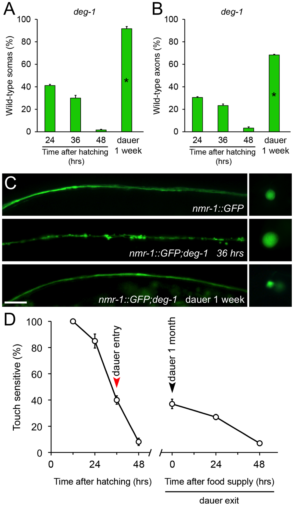 Diapause entry prevents degeneration of the PVC neurons triggered by the <i>deg-1(u38)</i> mutation.