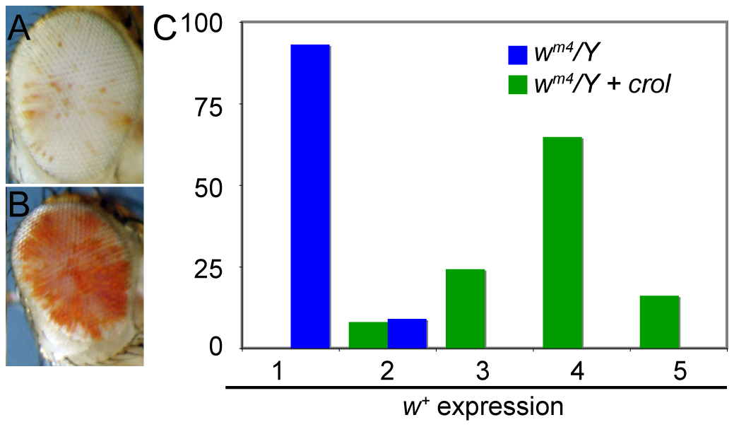 Early over-expression of <i>crol</i> is a general de-repressor of heterochromatic silencing.