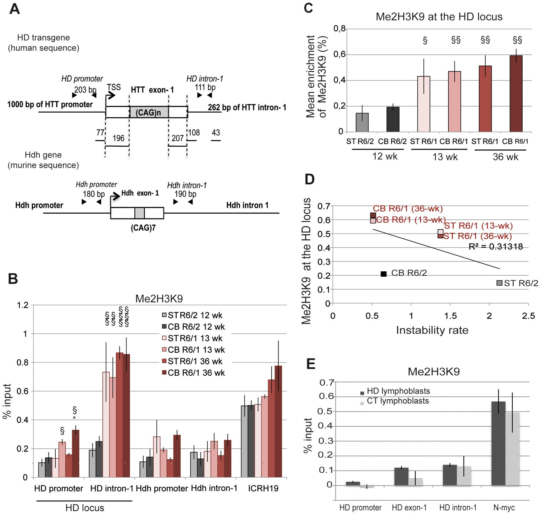 Me2H3K9 at the HD locus in R6/1 and R6/2 striatum and cerebellum.