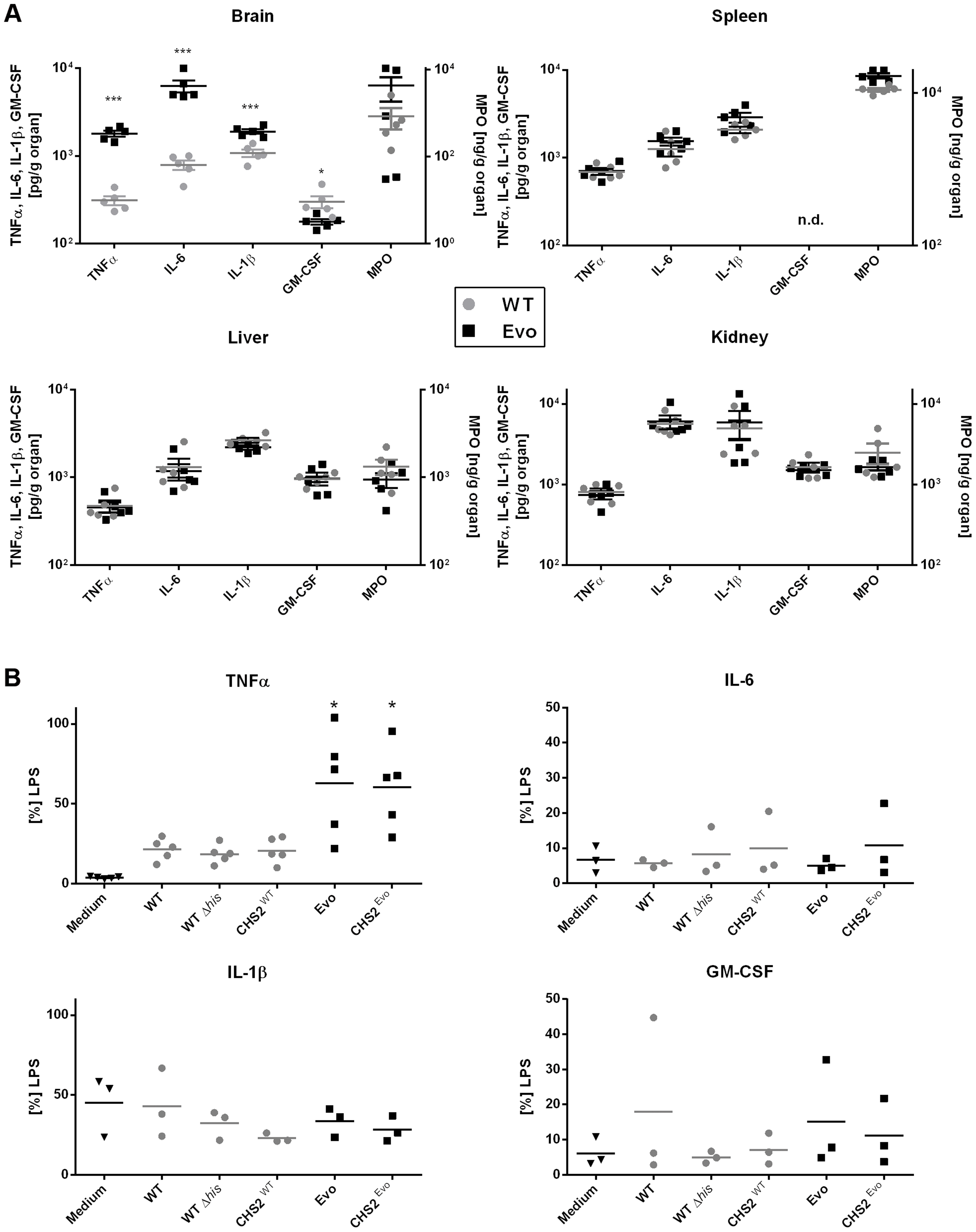 Differences in the host cytokine response to wild type and Evo strains <i>in vivo</i> and <i>in vitro</i>.