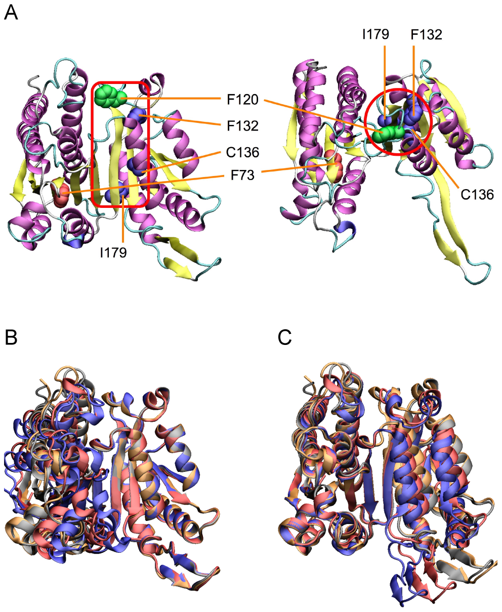 Locations of compensatory mutations for F73L.