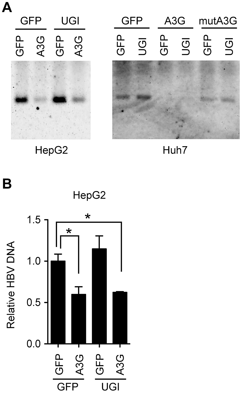 UNG does not affect HBV NC-associated DNA levels during 3 days of culture.
