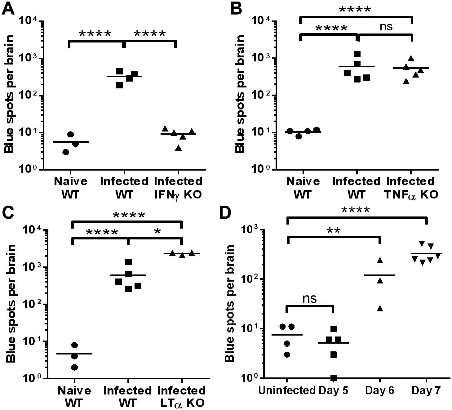 Cytokine requirements and timing of brain microvessel cross-presentation during PbA infection.