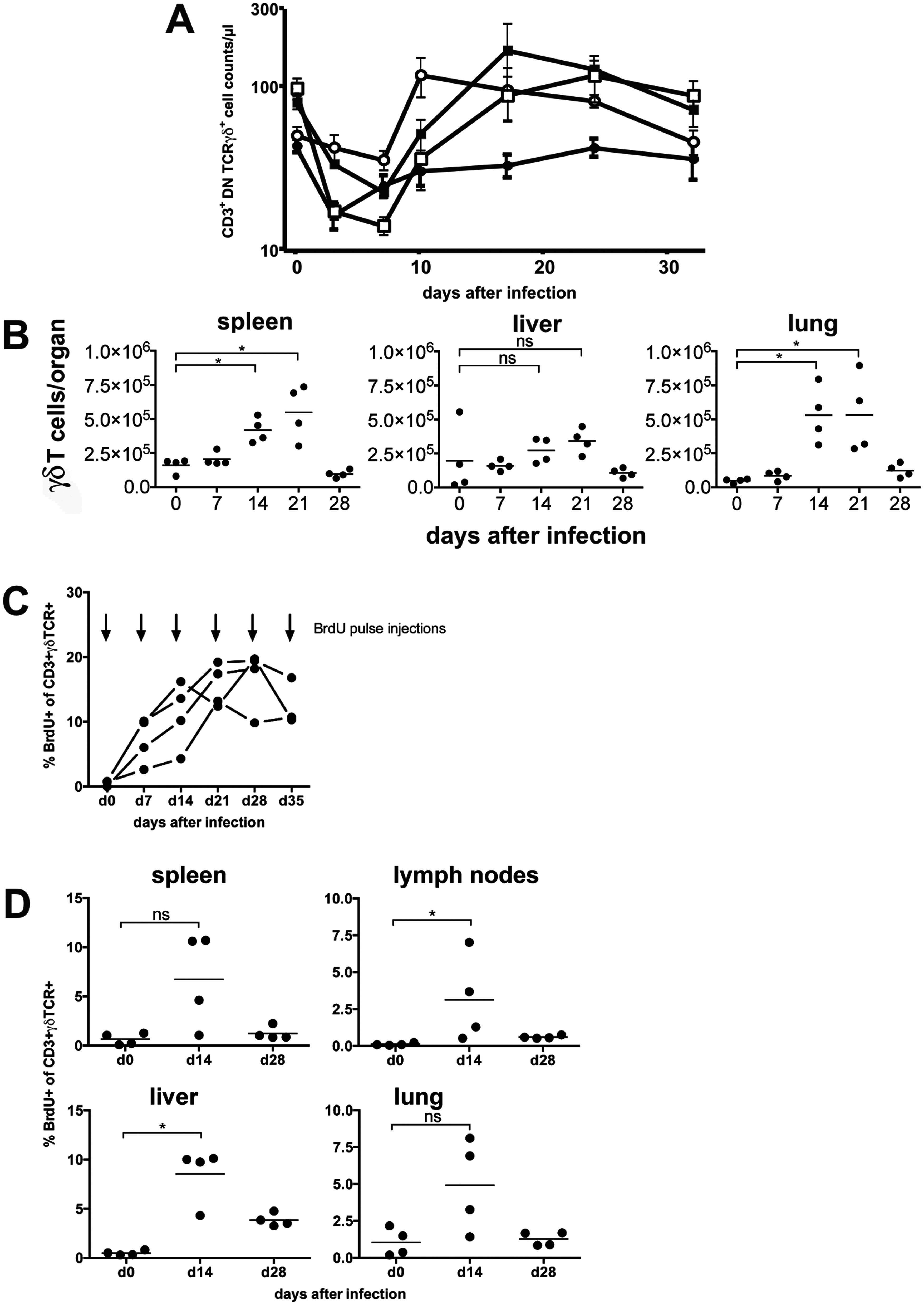 γδ T cells proliferate in the peripheral blood and in target organs after infection.