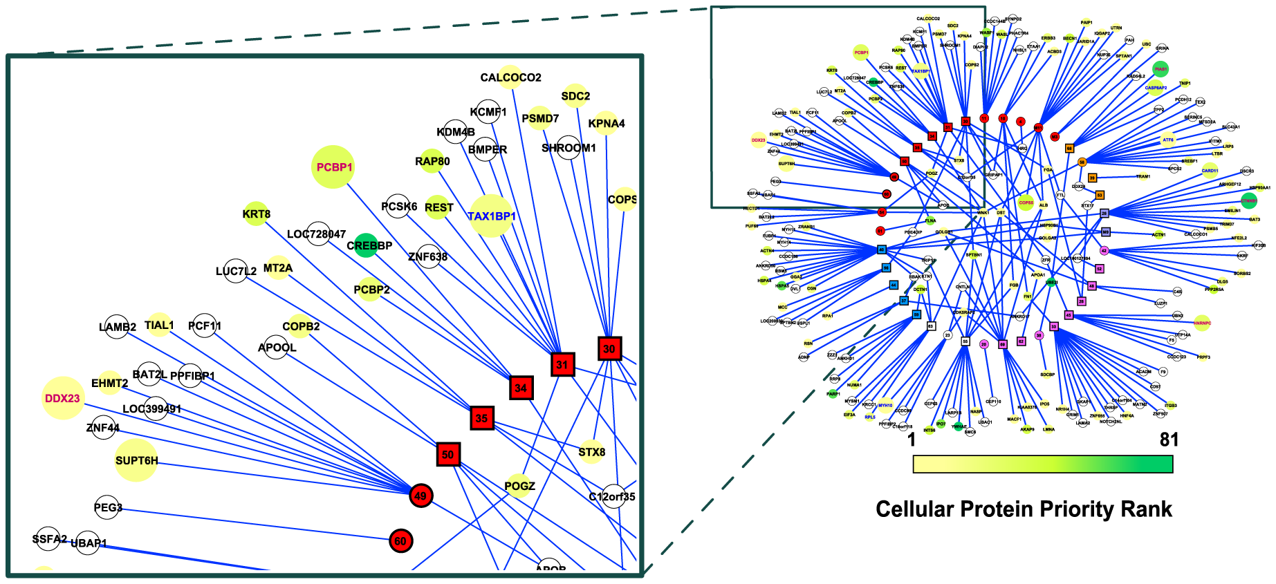 The MHV-68-cellular protein interactome.