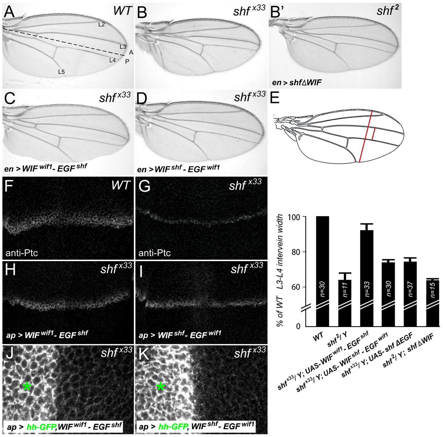 Vertebrate WIF domain regulates long-range Hh signaling.