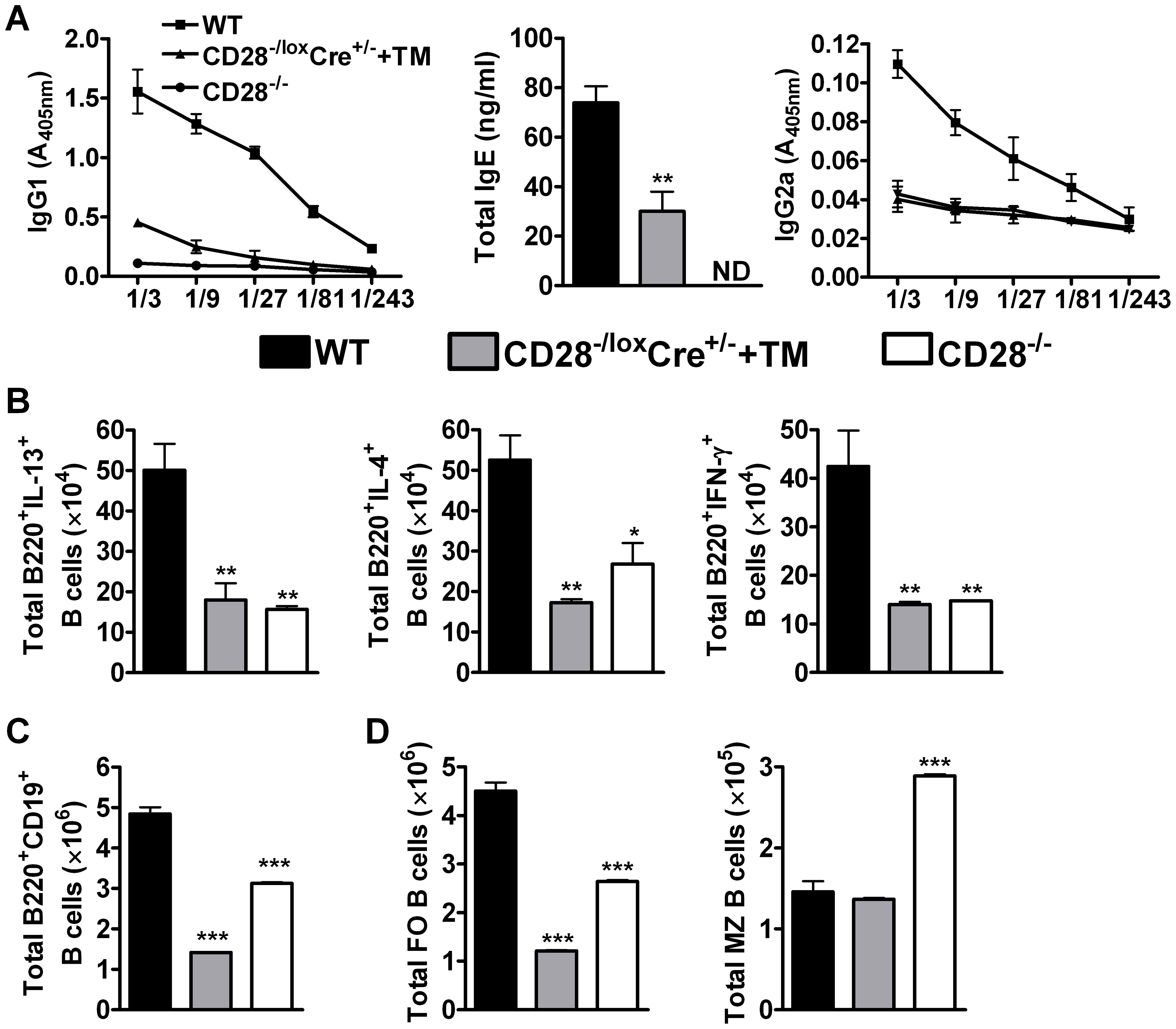 B cell development in the mediastinal lymph node is affected by CD28 deletion on CD4<sup>+</sup> T cells.