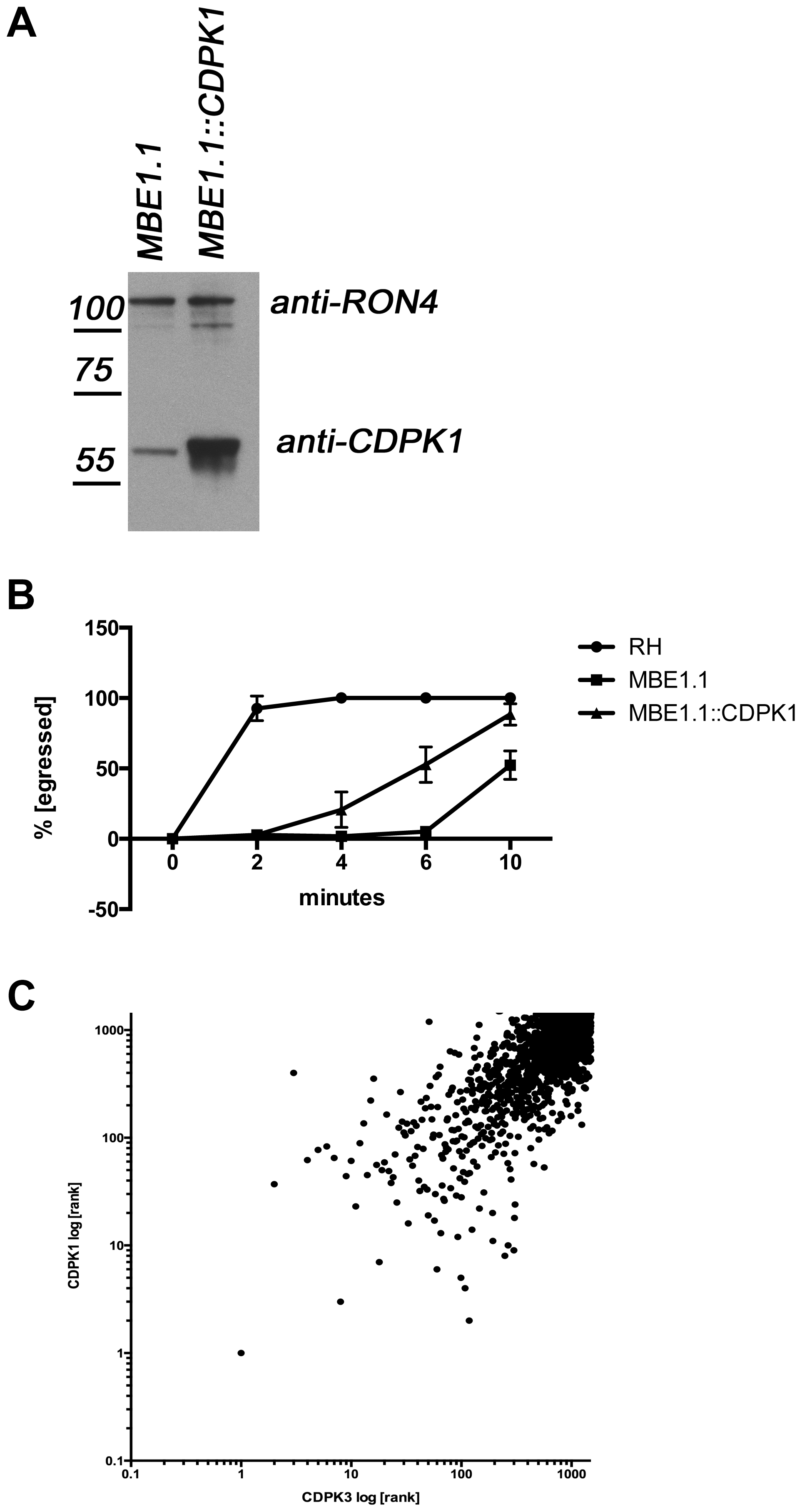 Overexpression of TgCDPK1 partially rescues the egress defect.