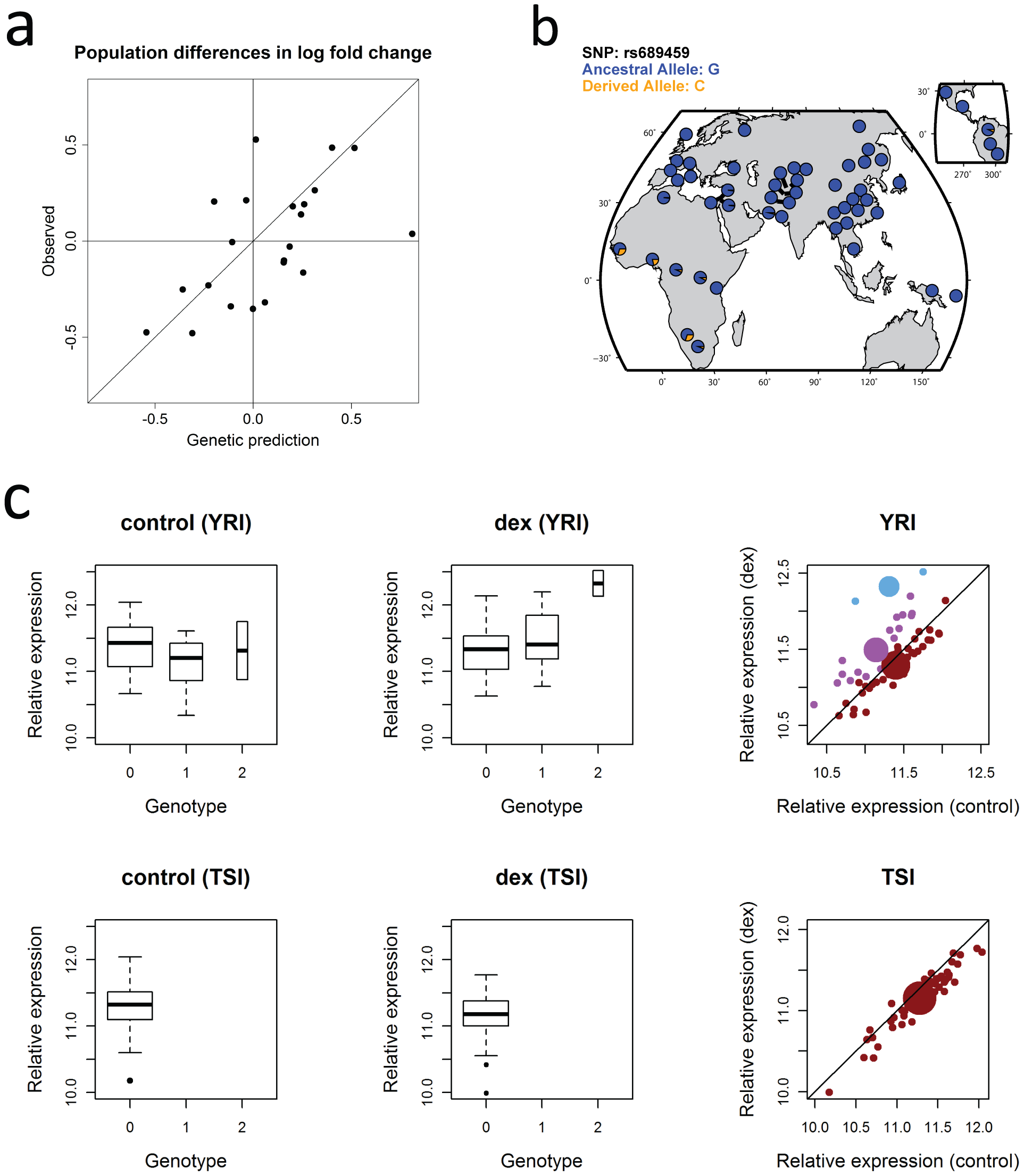 Population differences in transcriptional responses and allele frequency differences at an interaction eQTLs.