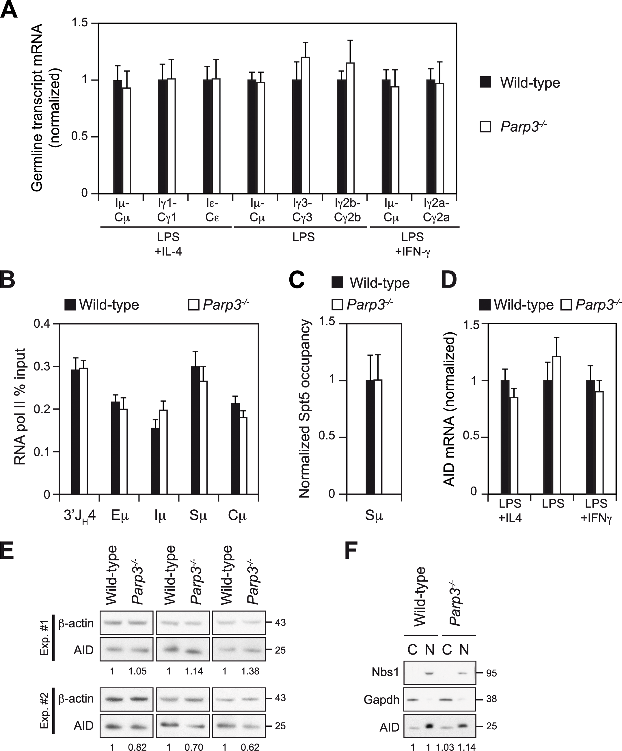 Switch region transcription, AID expression and AID sub-cellular localization are not affected by Parp3-deficiency.