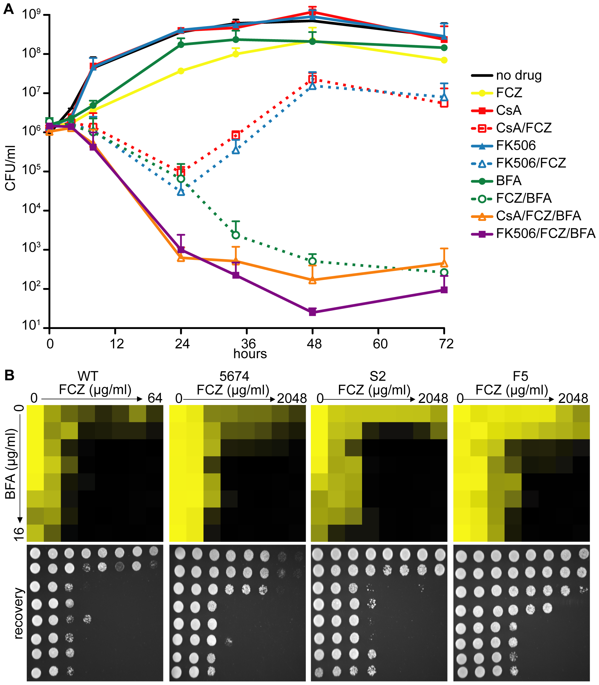 Pharmacological inhibition of ARF cycling results in a potent, fungicidal synergy in combination with FCZ in <i>C. albicans</i>.