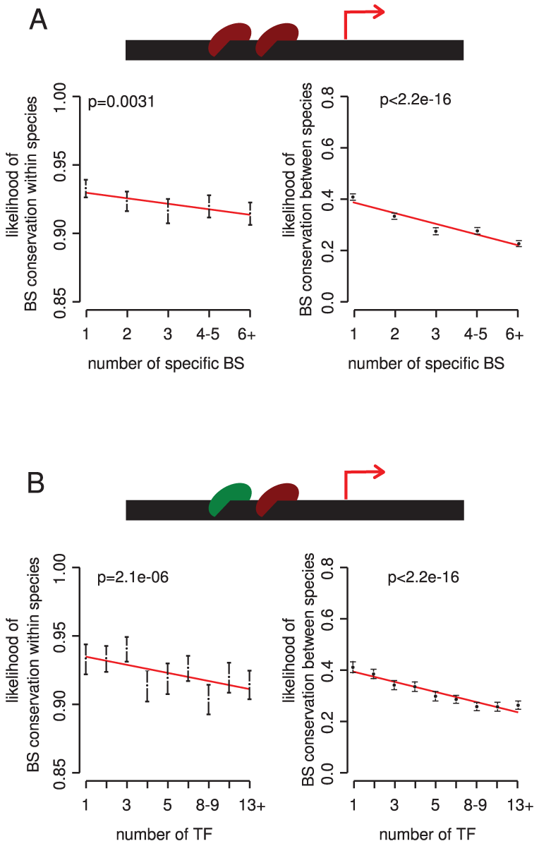 The potential for redundancy at the level of multiple binding sites for the same TF and among different TFs reduces the selective constraint on individual binding sites.