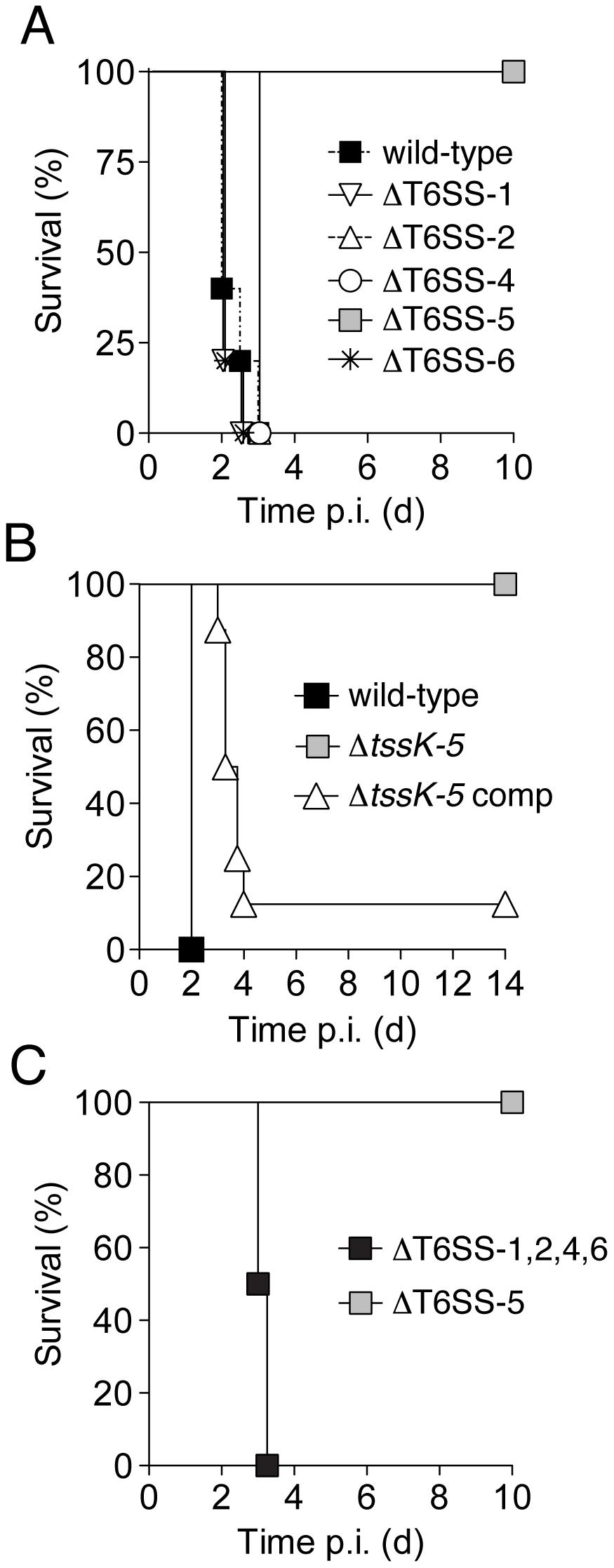 Of the five <i>B. thai</i> T6SSs, only T6SS-5 is required for virulence in a murine acute melioidosis model.