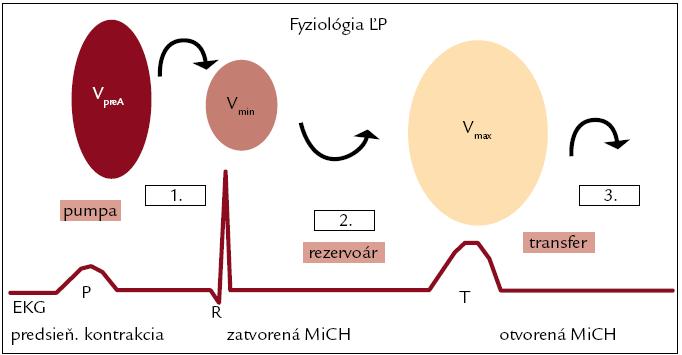 Objemy ľavej predsiene počas srdcového cyklu [16]. 1. – predstavuje objem aktívneho vyprázdnenia ĽP; 2. – objem celkového vyprázdnenia ĽP; 3. – objem pasívneho vyprázdnenia ĽP. V<sub>preA</sub> – preatriálny kontrakčný objem, V<sub>max</sub> – maximálny objem ĽP, V<sub>min</Sub> – minimálny objem ĽP, MiCH – mitrálna chlopňa