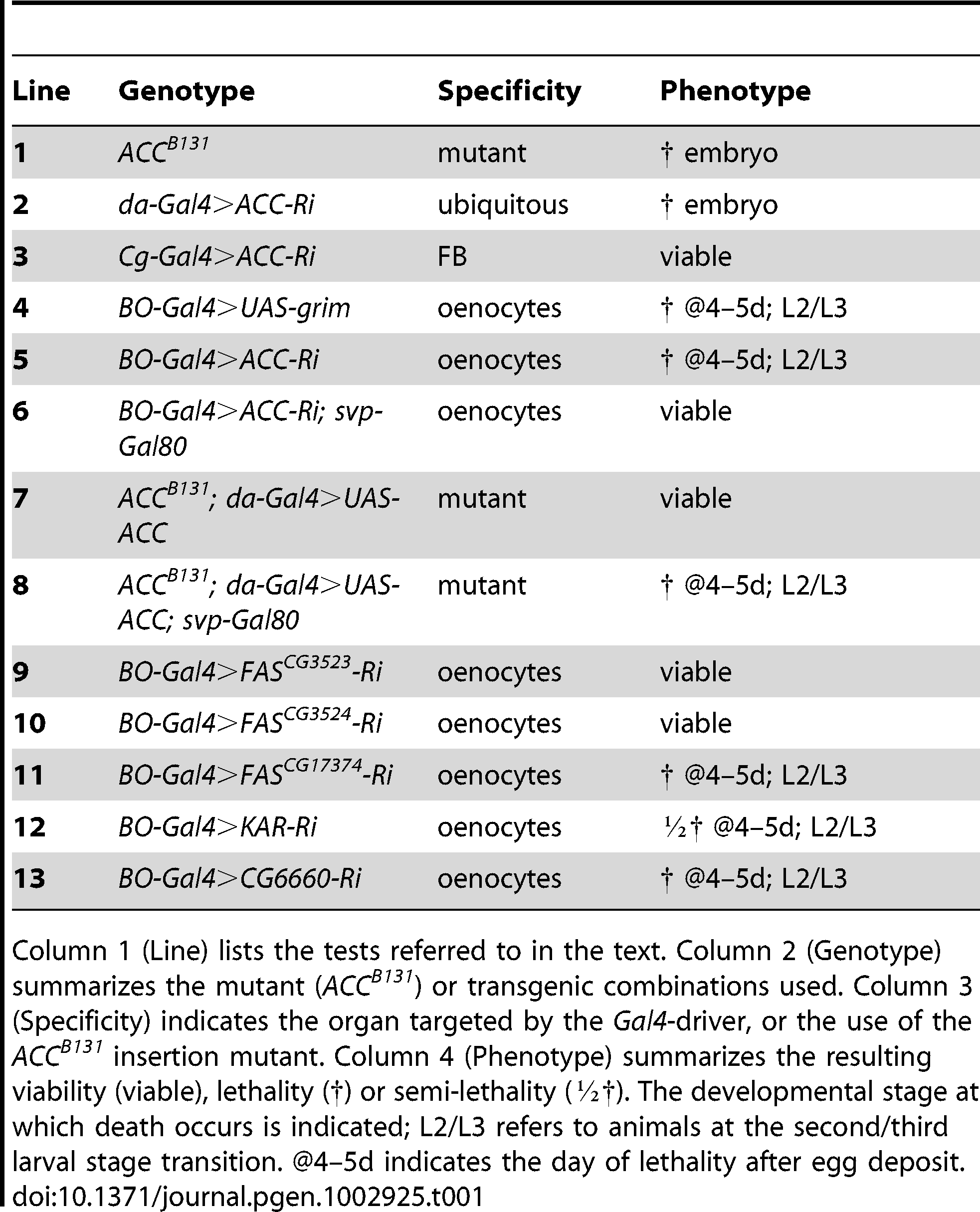 Genetic analysis of <i>ACC</i> by tissue-targeted knockdown.