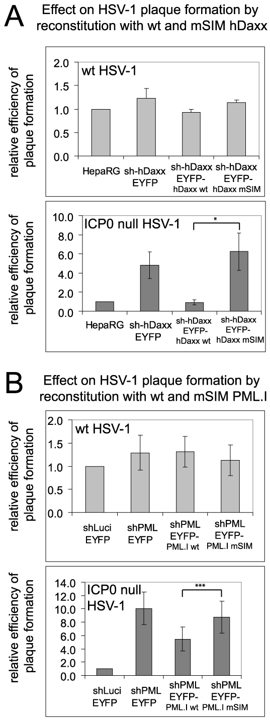 The SIMs of PML and hDaxx are required for repression of ICP0 null mutant HSV-1 plaque formation.