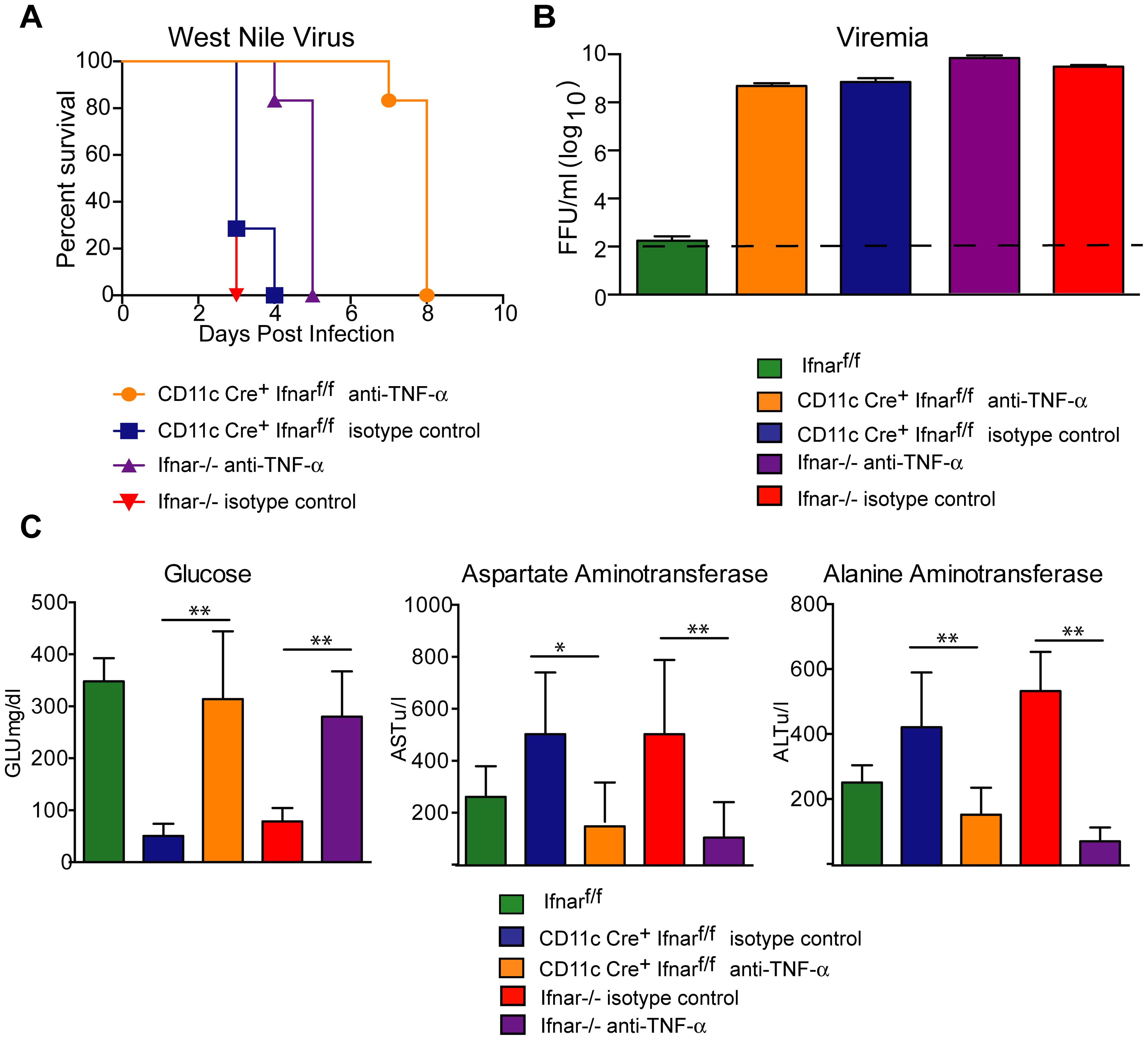 TNF-α blockade prolongs survival of WNV infected CD11c Cre<sup>+</sup> <i>Ifnar</i><sup>f/f</sup> and <i>Ifnar</i><sup>−/−</sup> mice.