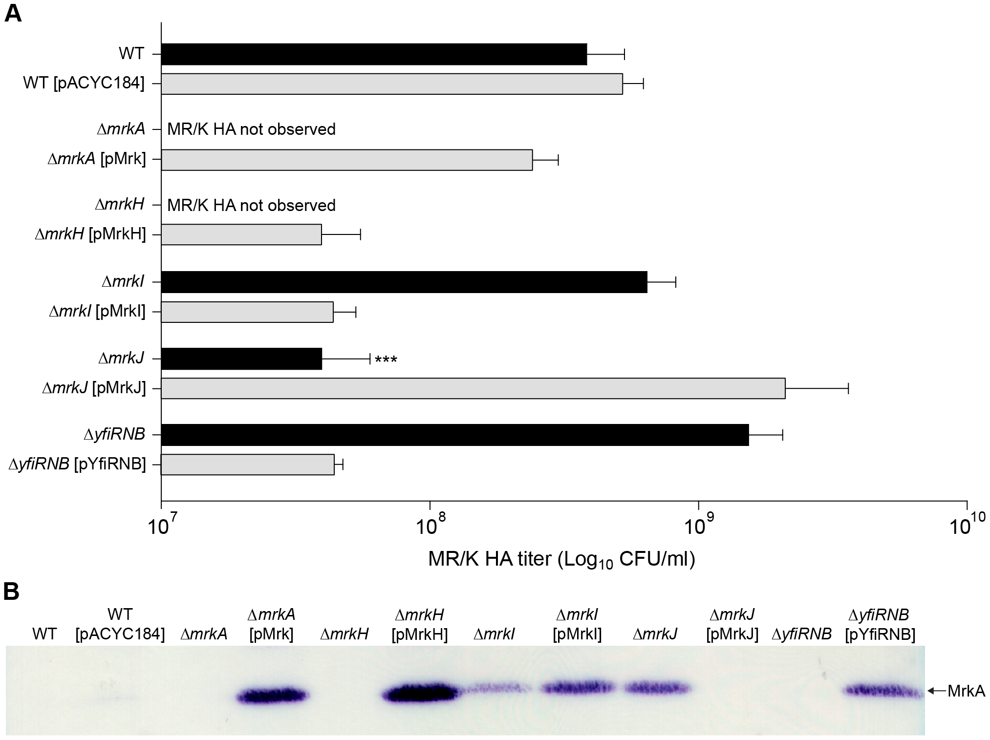 Type 3 fimbriae expression by <i>K. pneumoniae</i> AJ218.