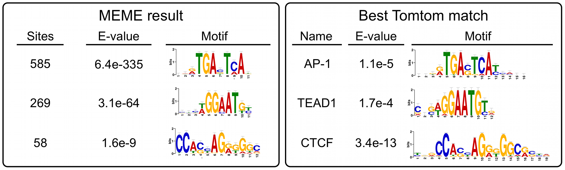 Non-MER85 peaks are enriched for TRE, TEAD1, and CTCF binding site motifs.