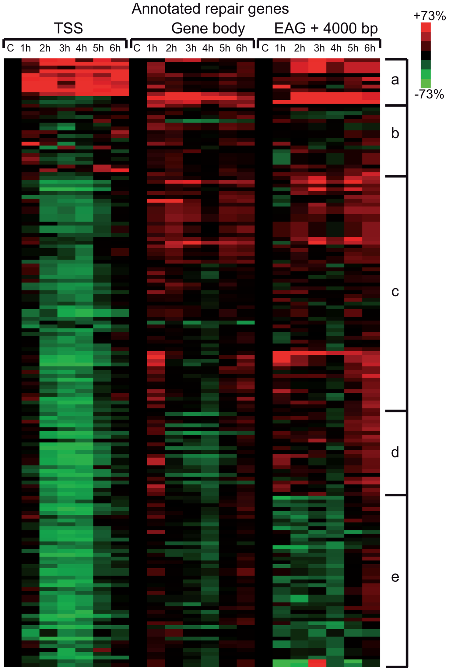 Pol II behavior on annotated DNA damage repair and UV responsive genes after UVB irradiation.